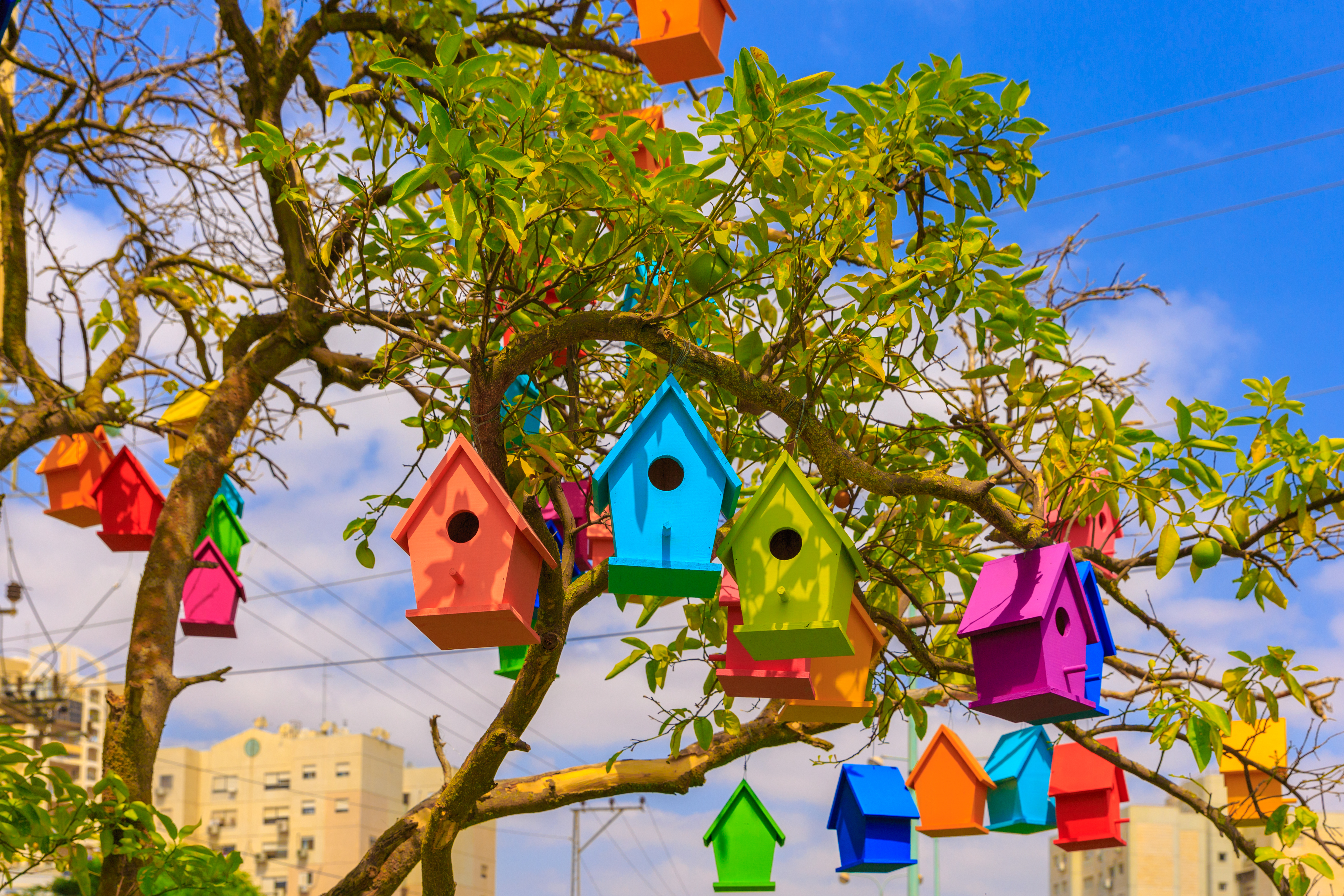 Avoid brightly coloured nest boxes. (Thinkstock/PA)