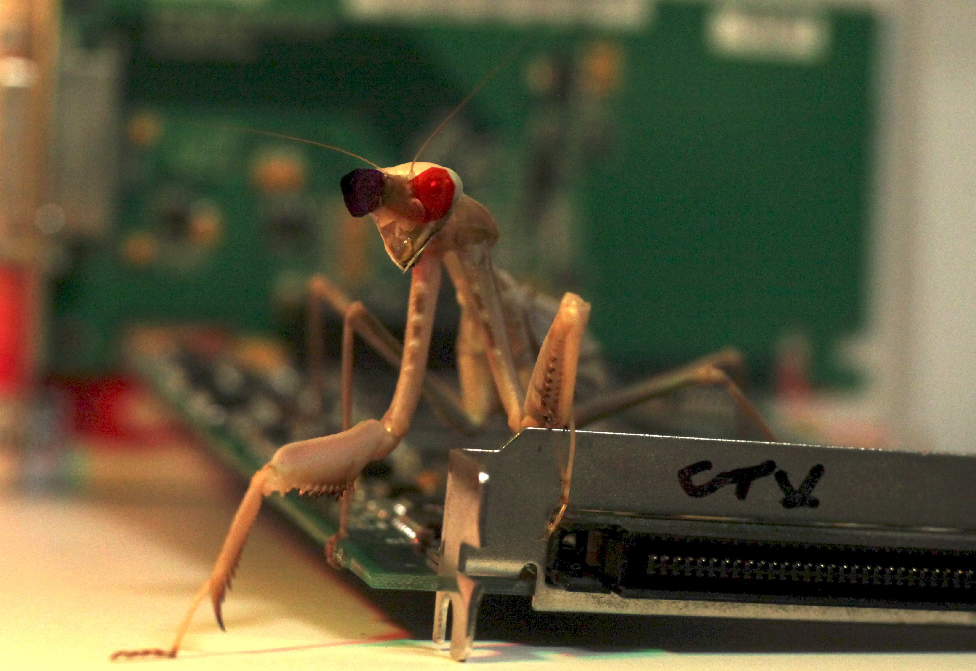 "Praying mantis on circuit board wearing coloured ""glasses"", one eye covered in blue, the other in red"