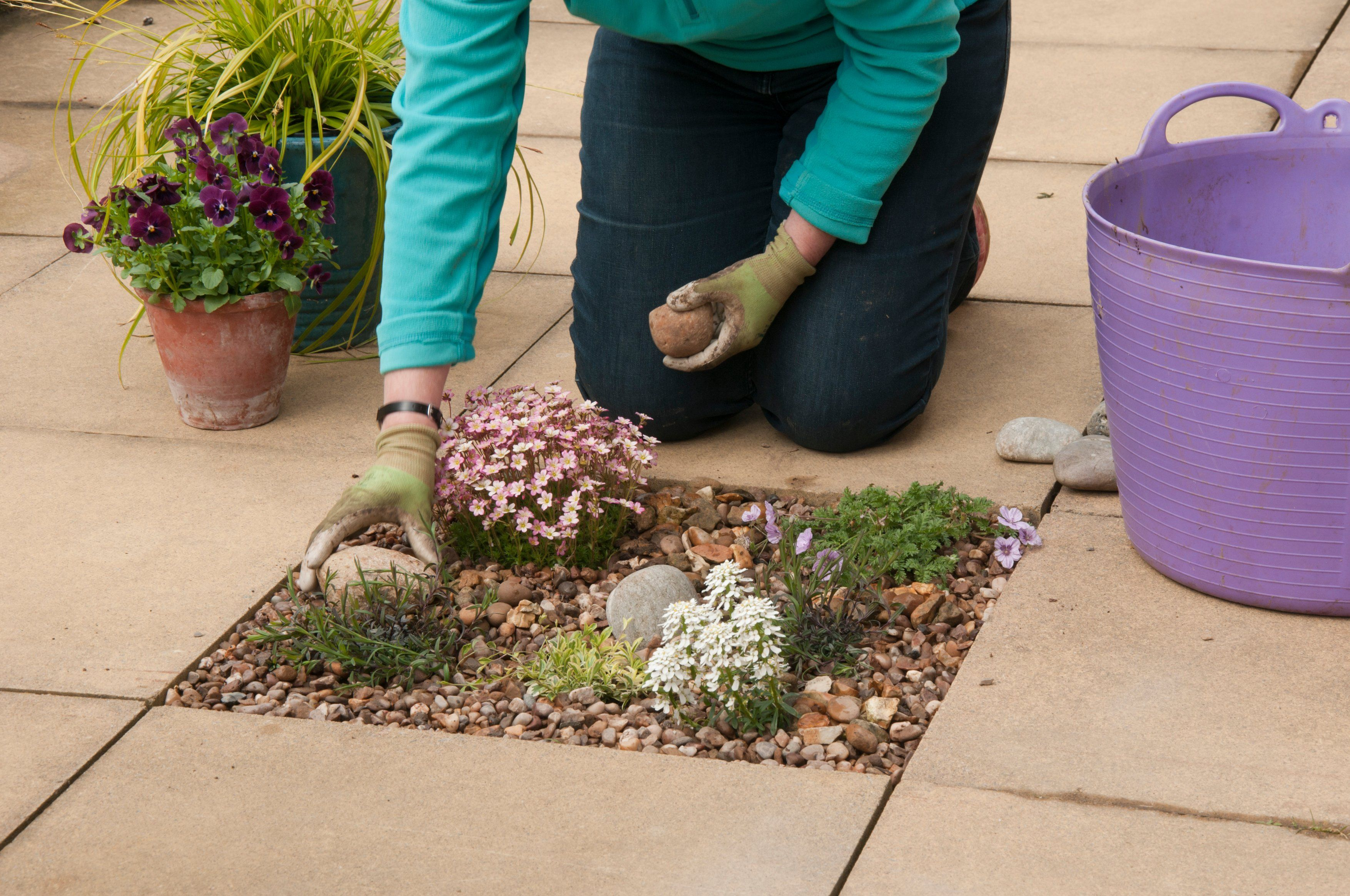 Small changes, like planting into patio paving, can make a big difference (RHS/PA)