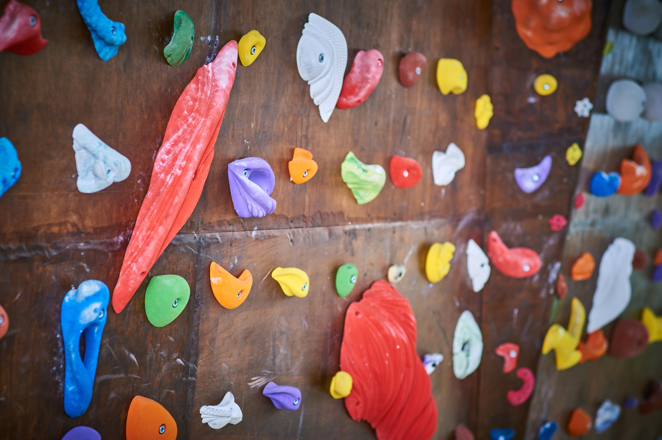 Wooden wall with multicolored climbing holds in gym