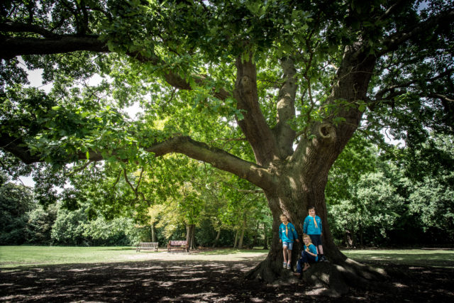 The Gilwell Oak is synonymous with the Scouting movement (Martyn Milner Photography/Woodland Trust/PA)