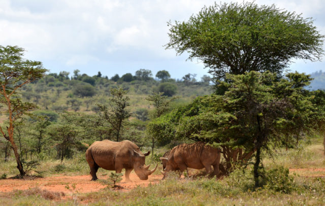 The parks are home to rhinos, as well as elephants, rhinos and other animals. (Ministry of Defence)