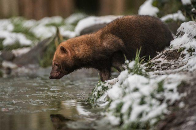 animals made of snow - photo #41