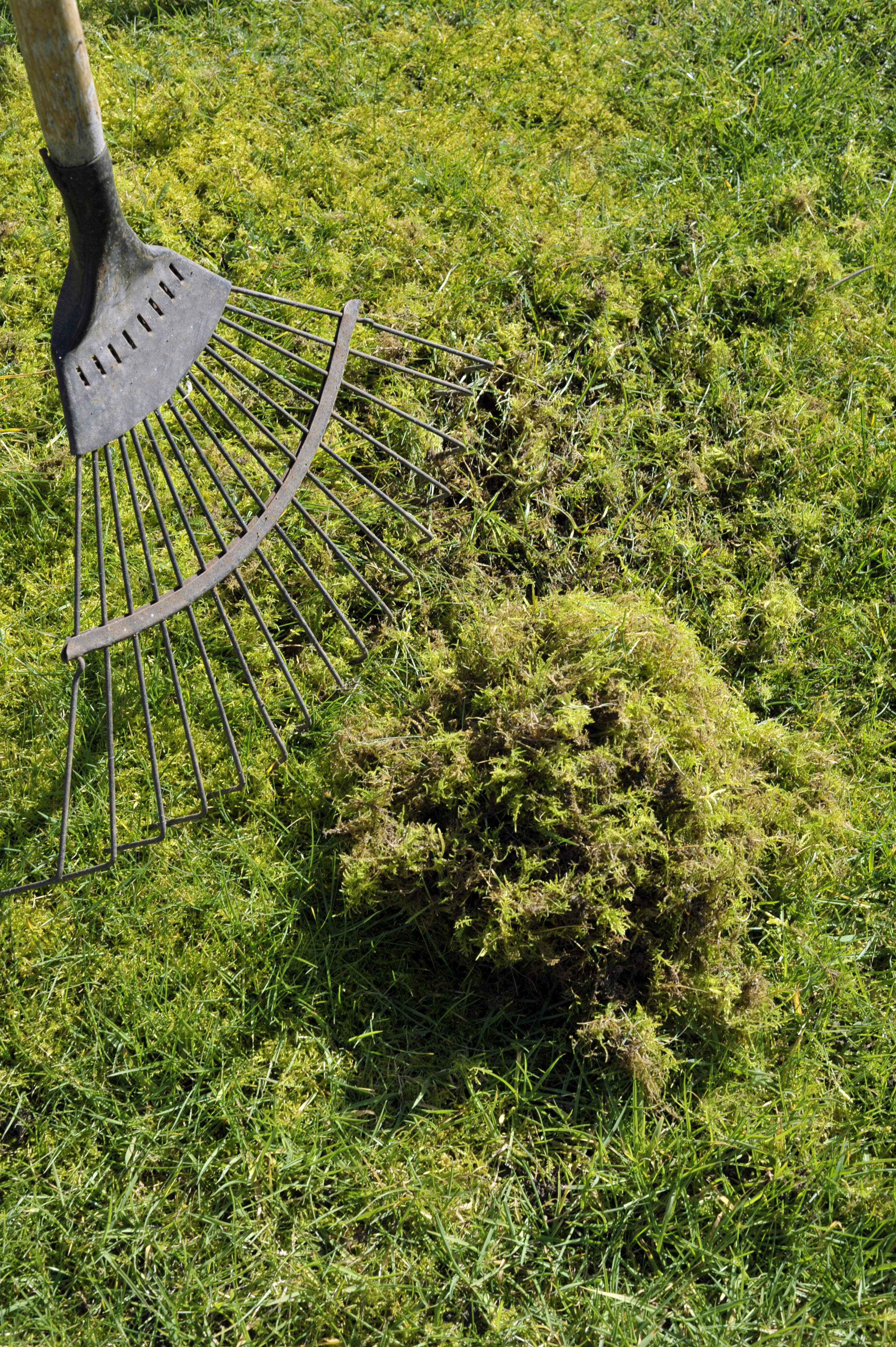 how to get rid of the moss