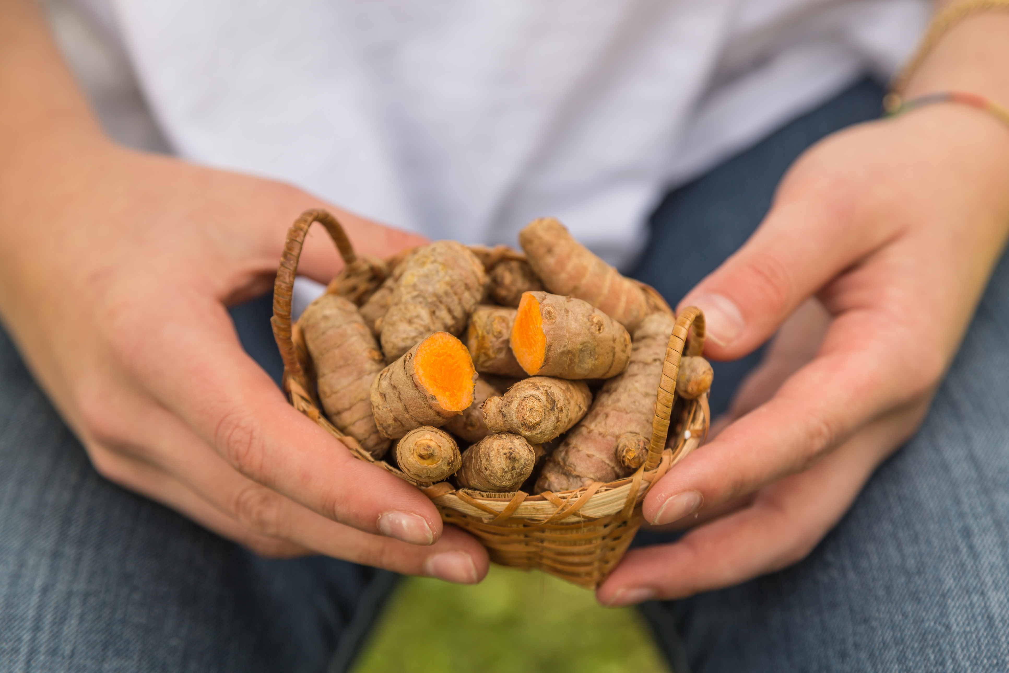 Close-up of female hands holding fresh root turmeric in a basket