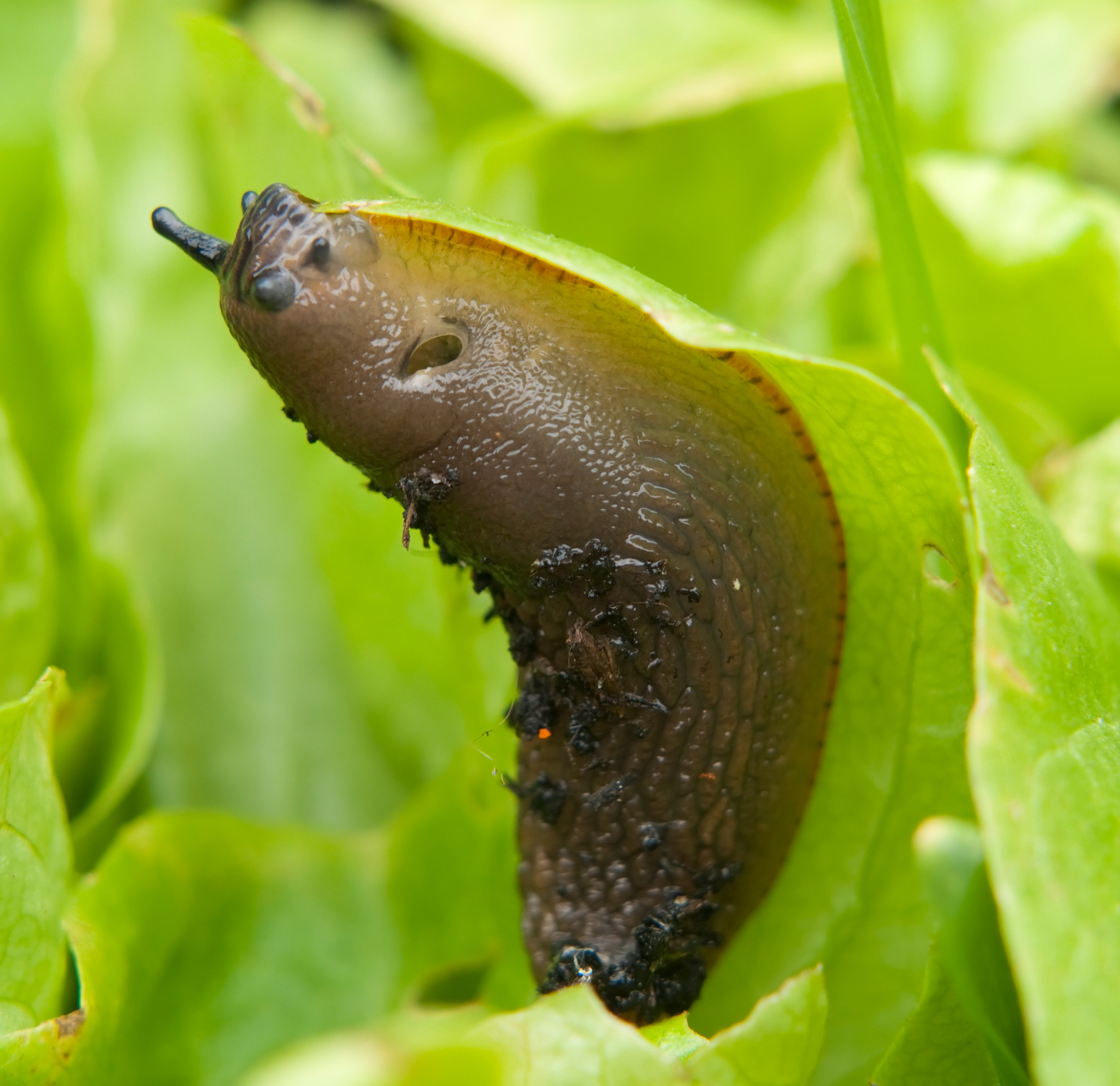 Place grit around plants to stop slugs in their tracks. (Thinkstock/PA)