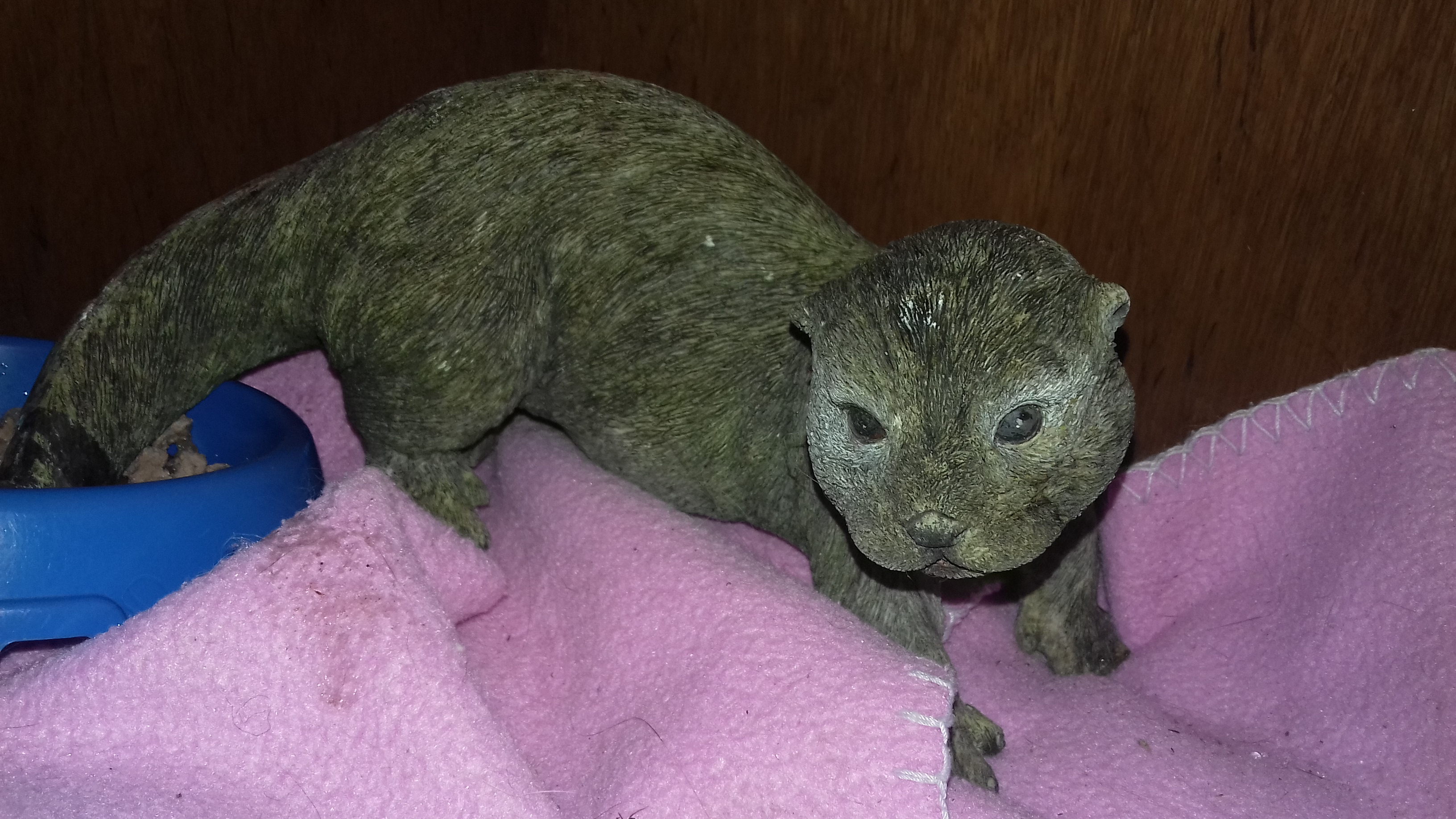 A woman in Aberdeen mistook the ornamental otter for a lizard after finding it in her cat's shelter (Scottish SPCA/PA)