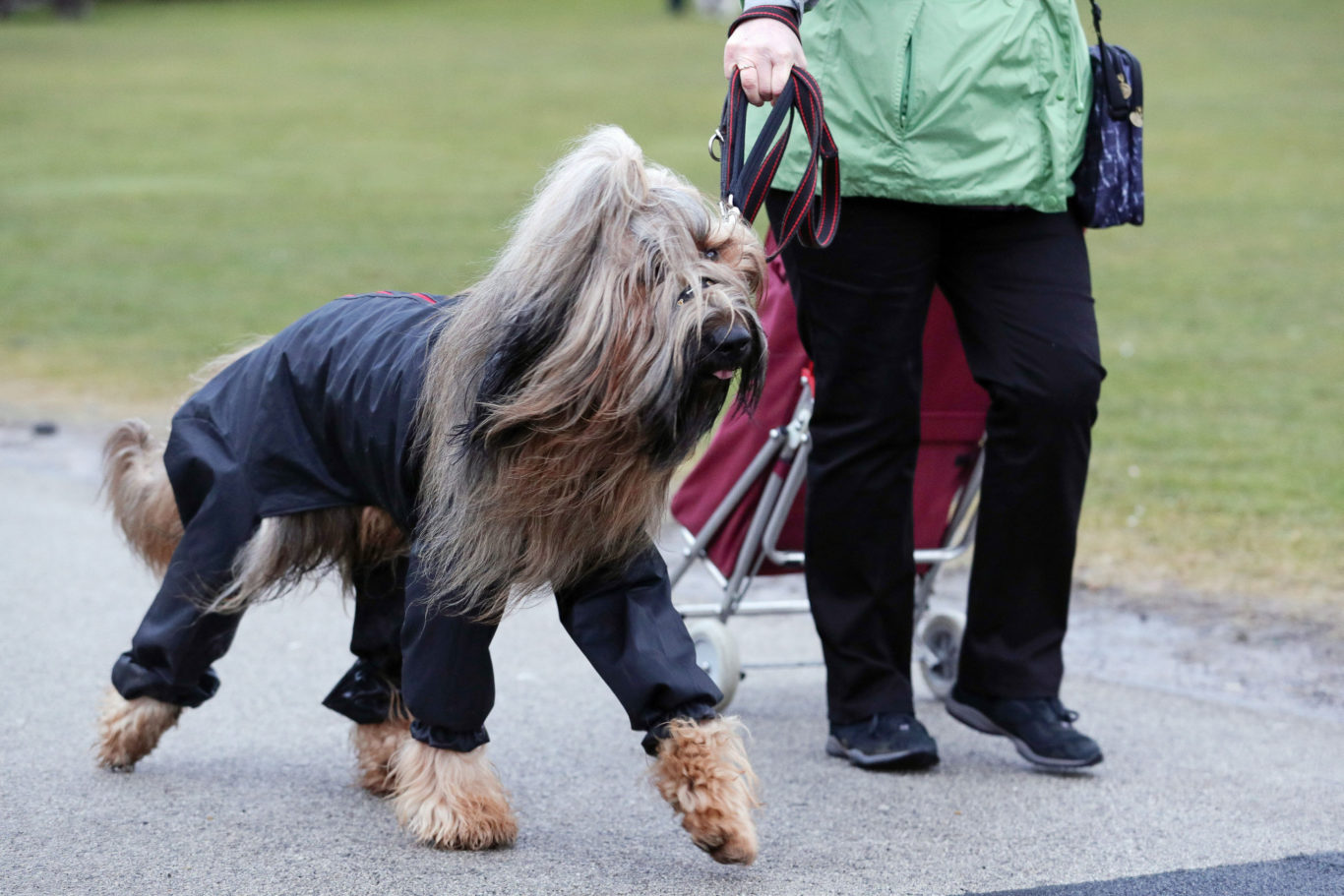 In Pictures: Cute canines compete for Crufts crown ...