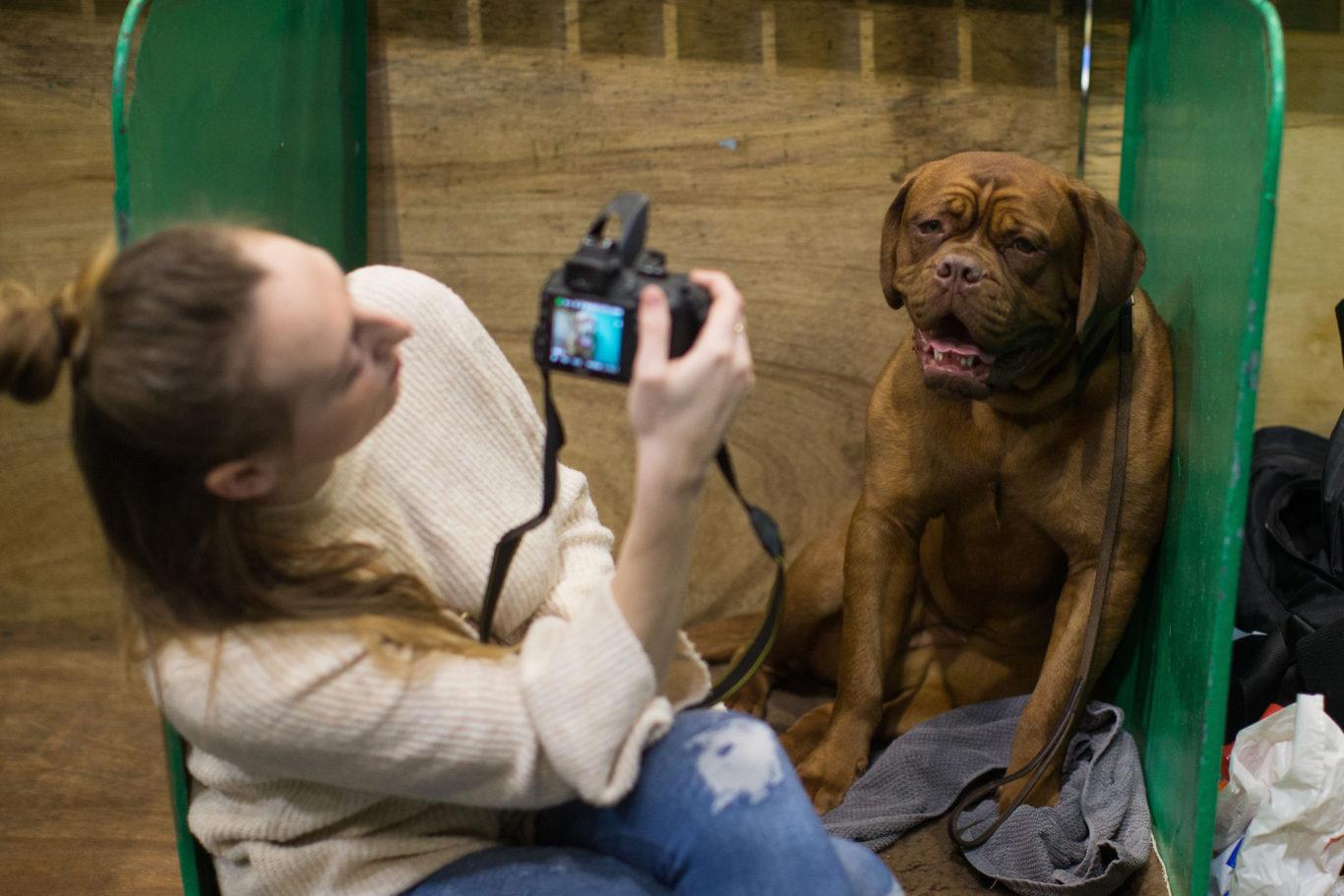 Luton Dog Show