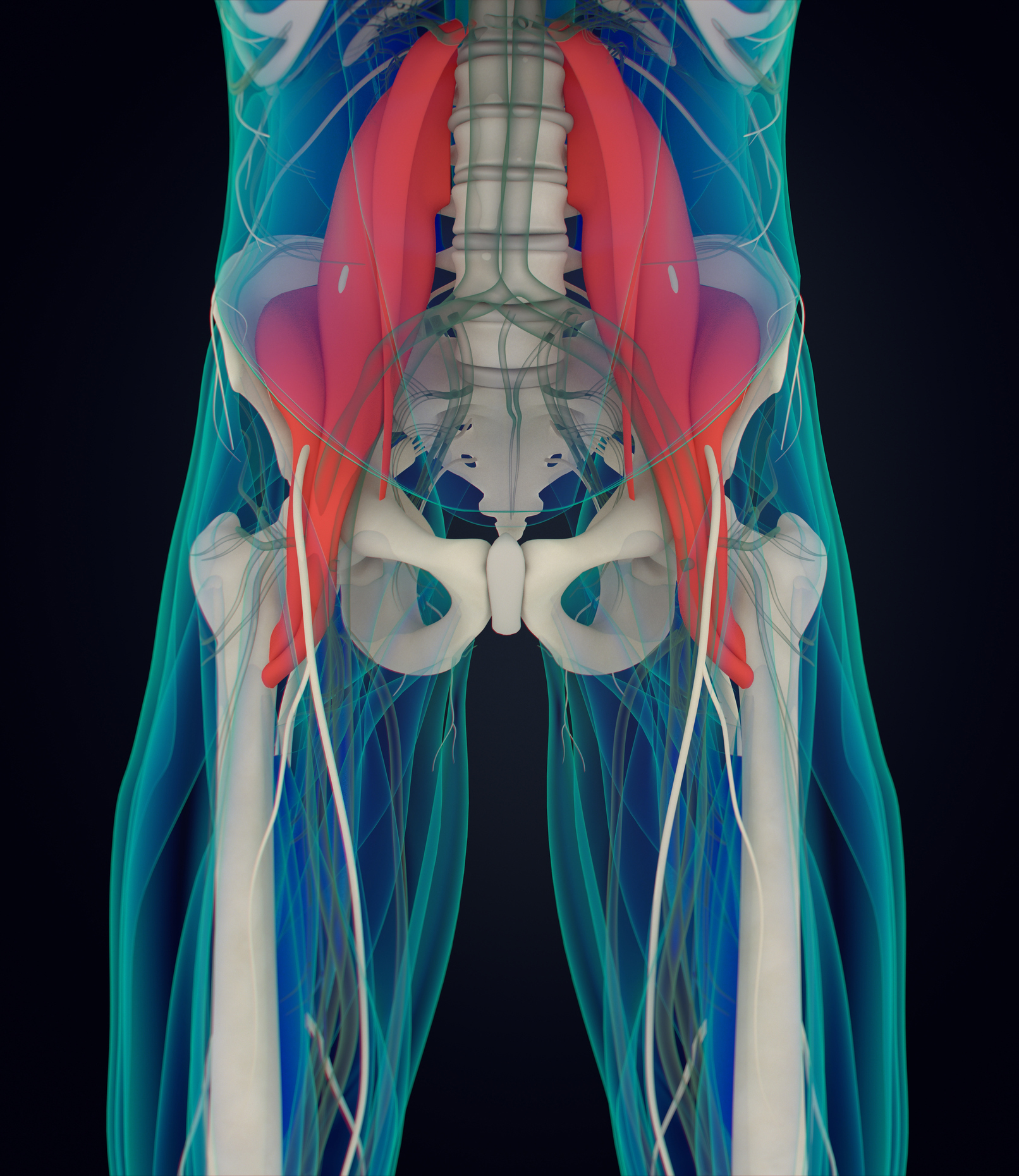 The psoas muscle (Thinkstock/PA)