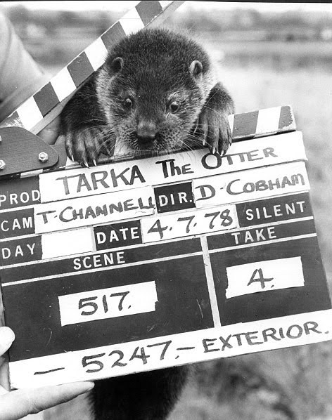 Tarka from Tarka The Otter (David Cobham)
