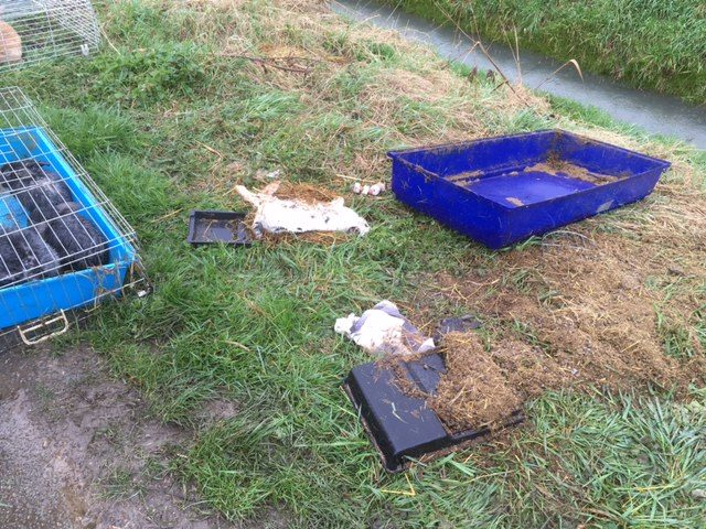 The tops came off the cages that the rabbits were abandoned in at Outwell, Norfolk. (RSPCA/ PA)