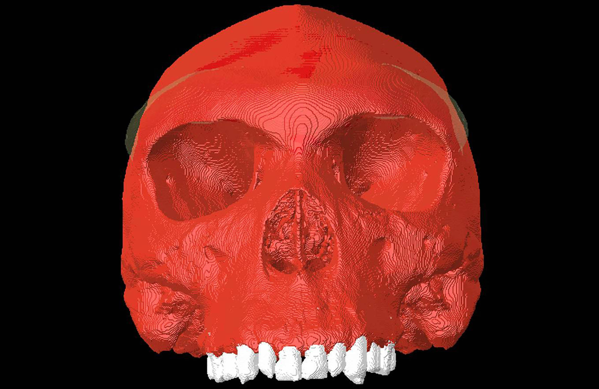 A 3D computer simulation of a skull from Zambia known as Kabwe 1 housed at London's Natural History Museum (University of York/PA)