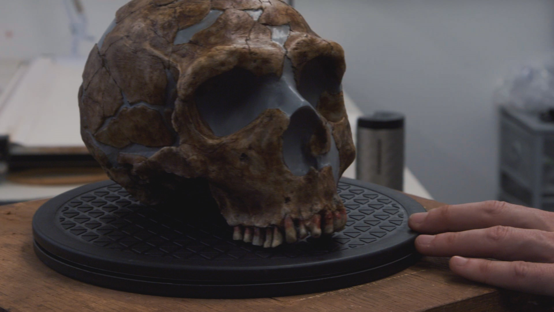 Ned's skull (Andy Serkis helping to create a CGI Neanderthal (Andy Serkis (VixPix/BBC/Natural History Museum)