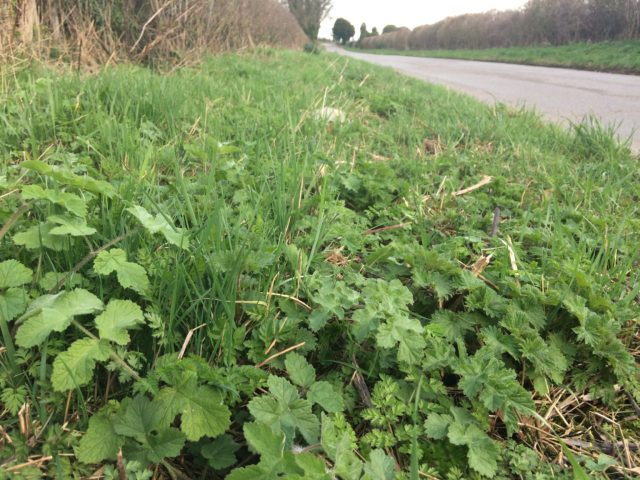 'Thuggish' plants such as nettle and cow parsley are taking over road verges (Trevor Dine/Plantlife/PA)