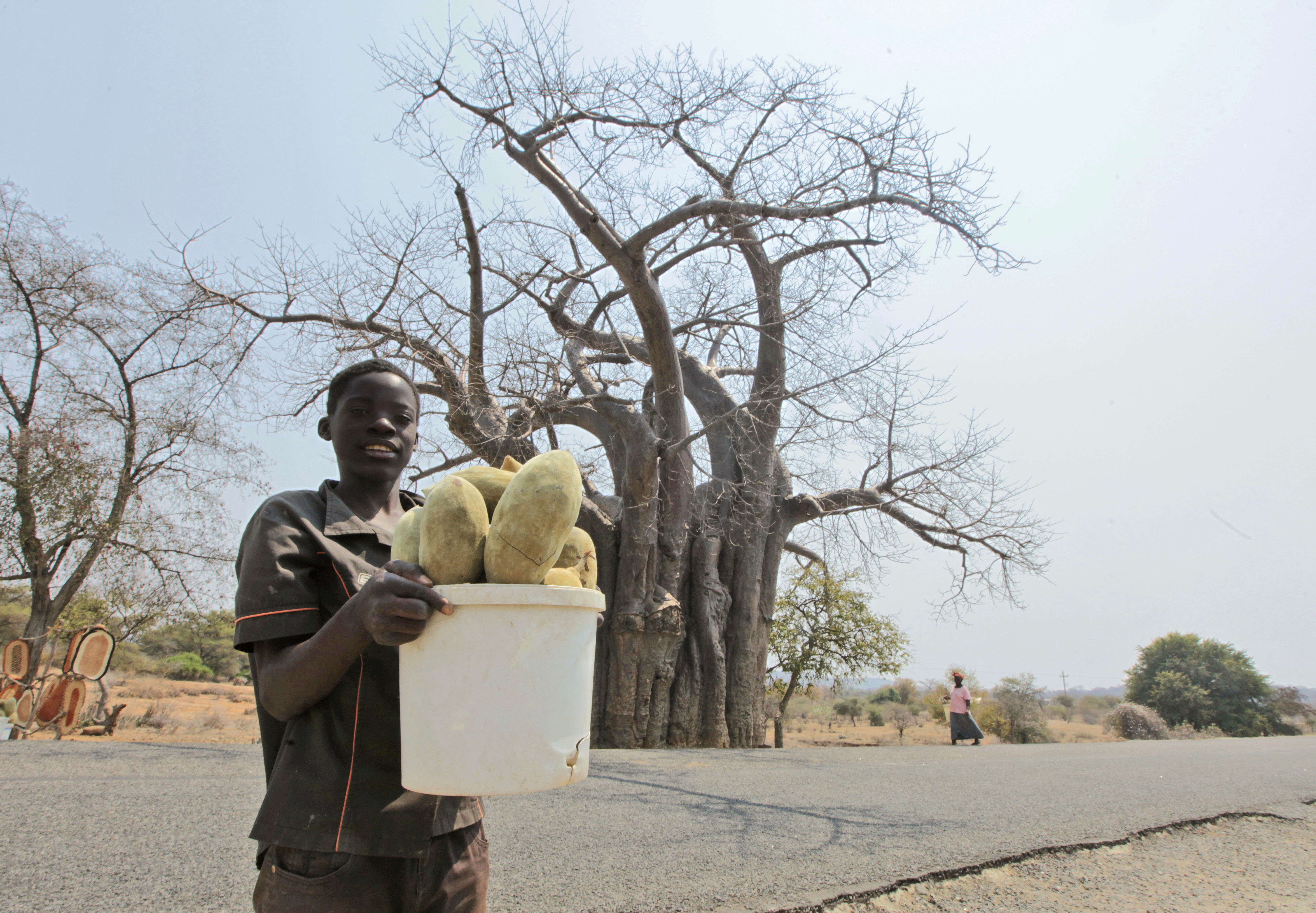 A child with a bucket of baobab fruit in Chimanimani