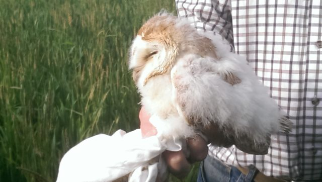 Barn owl numbers have increased on Martin Lines' Cambridgeshire farm, he says (Nature Friendly Farming Network/PA)
