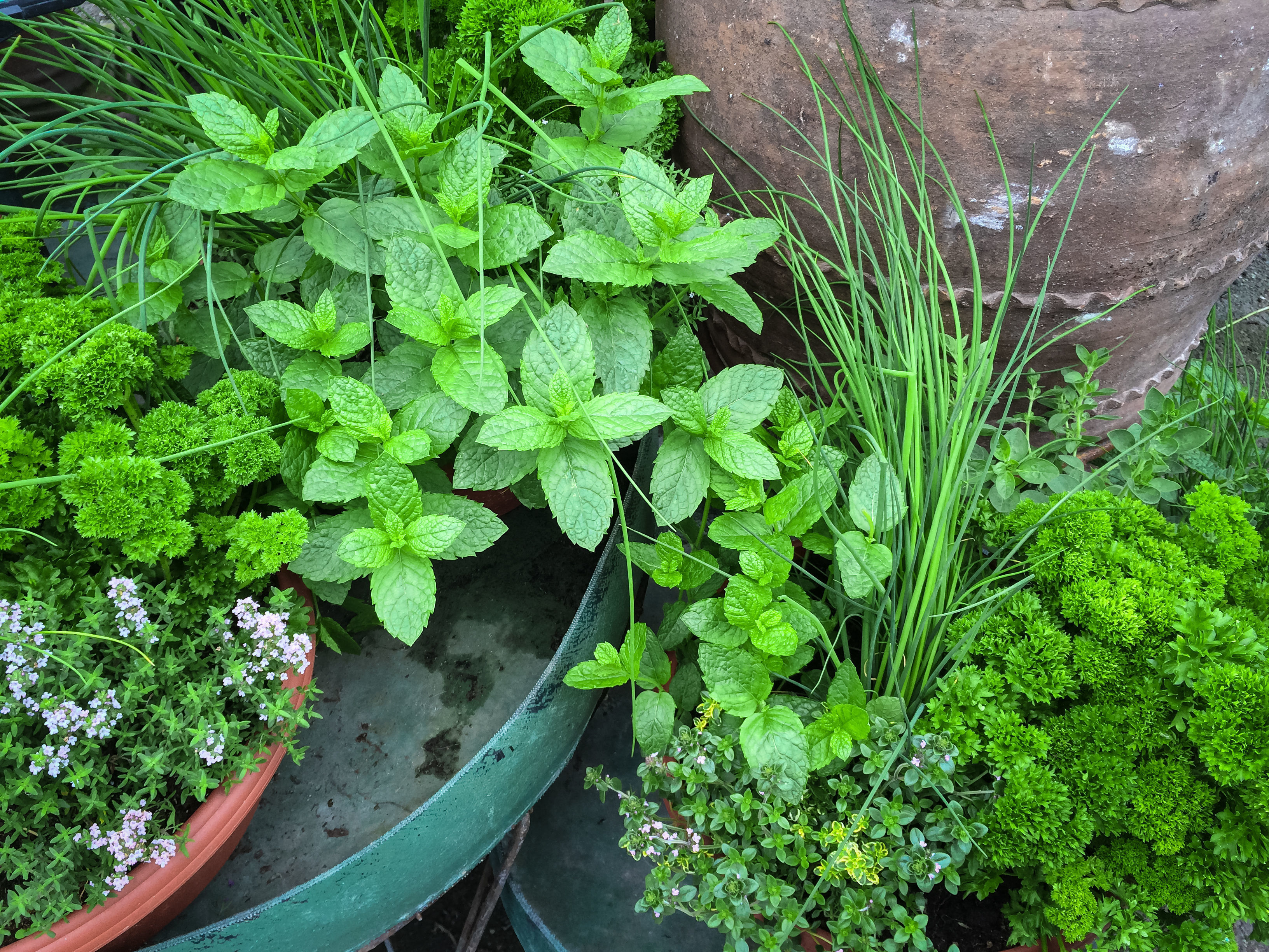 Herbs have great healing properties (Thinkstock/PA)