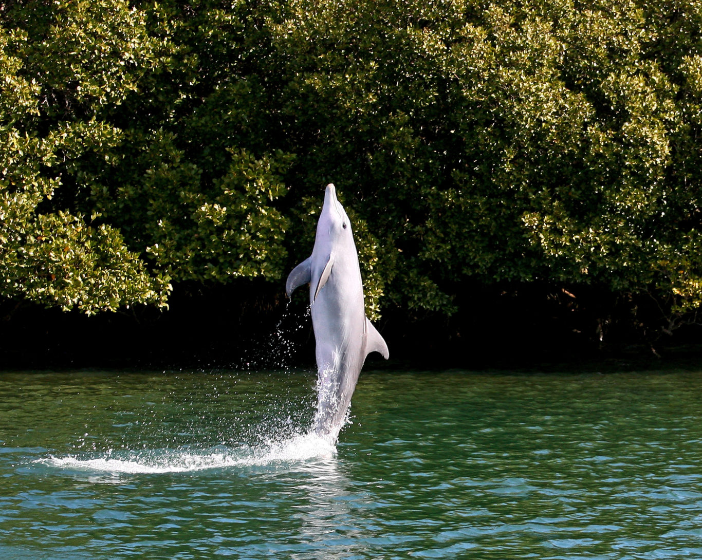 Картинки по запросу Dolphin which learned 'to walk on its tail