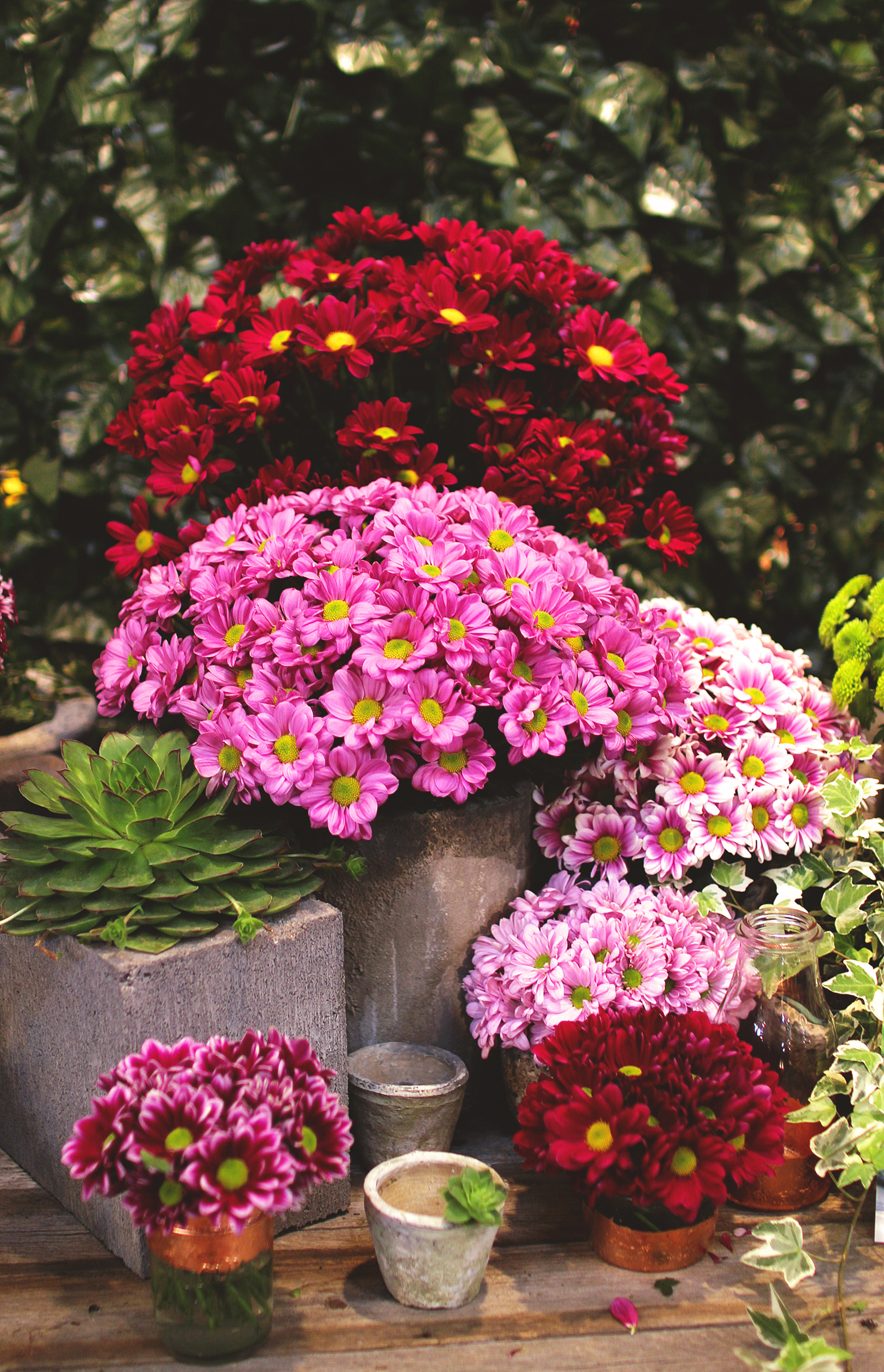 Chrysanthemums in pots in autumn (Thinkstock/PA)