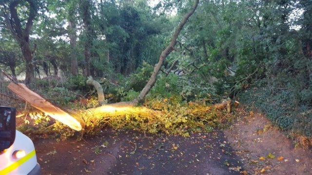 Fallen tree on the road in Hemingstone, Suffolk, during Storm Bronagh