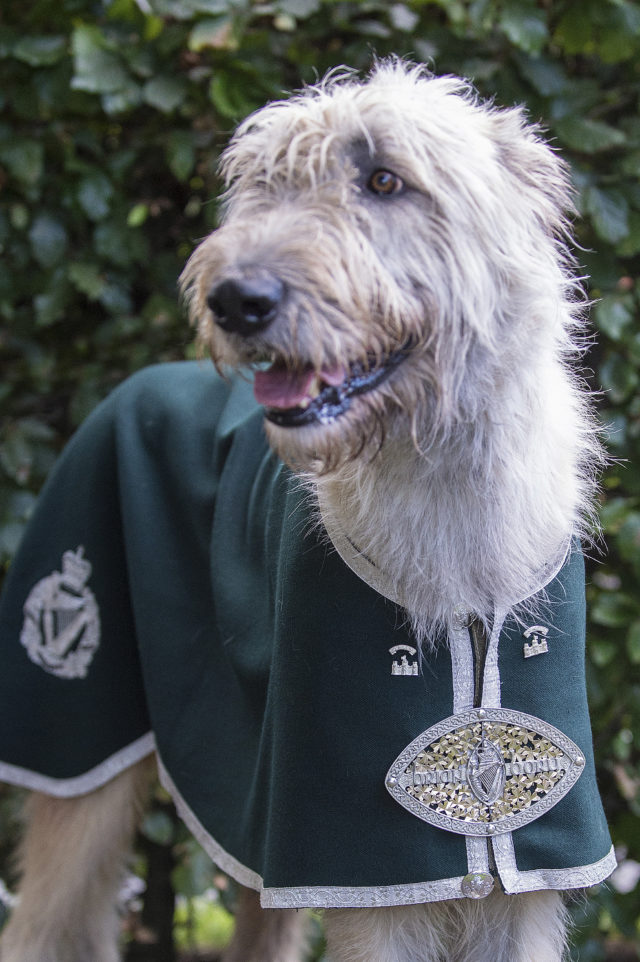 Royal Irish Mascot Brian Boru X
