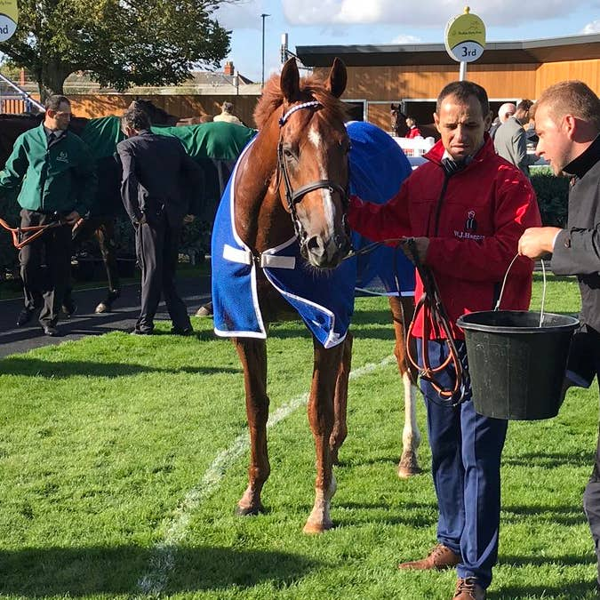 Mankib after his Listed-race success at Newbury