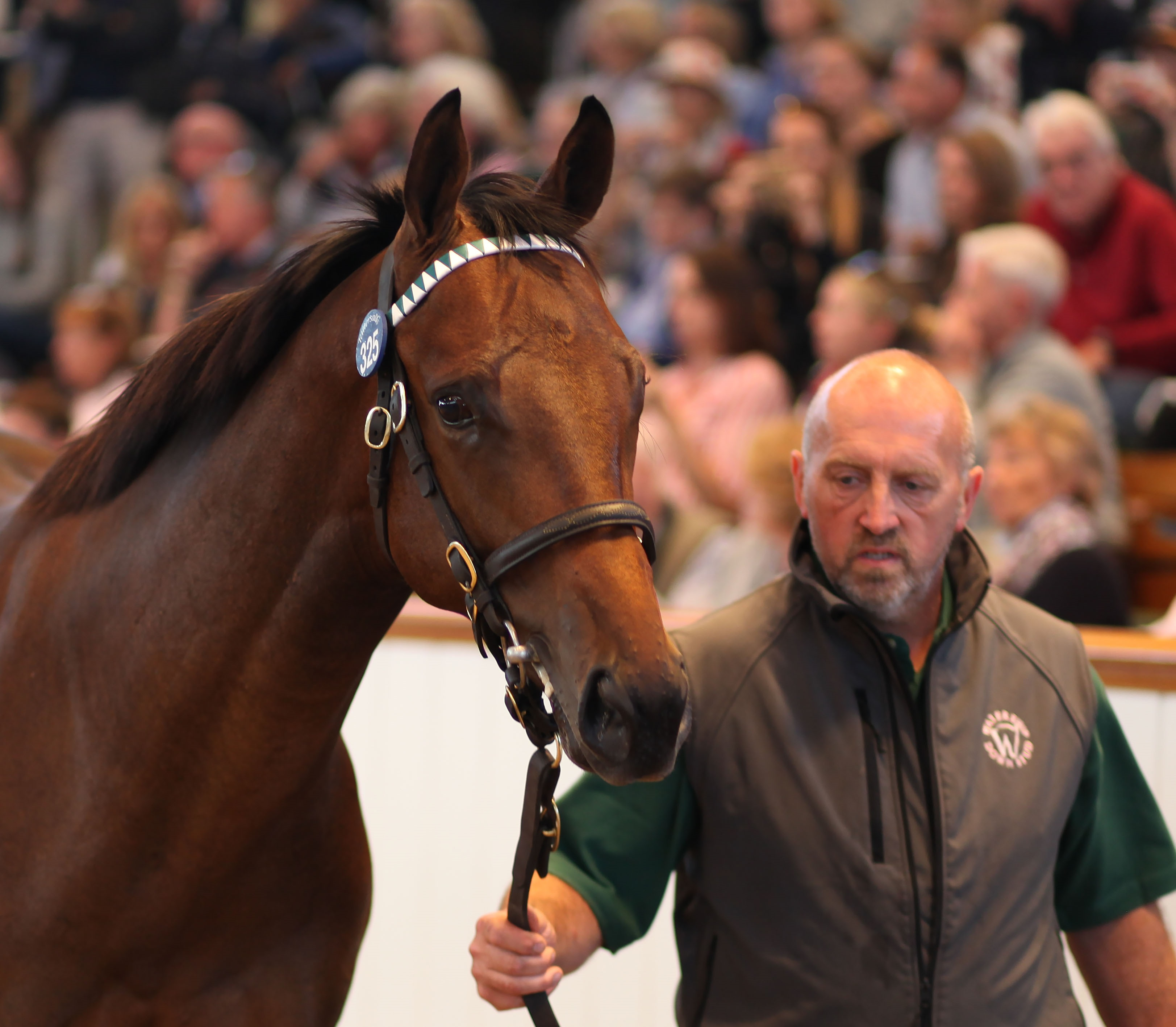 The striking Dubawi colt that went for 3.5million guineas at the sales in Newmarket