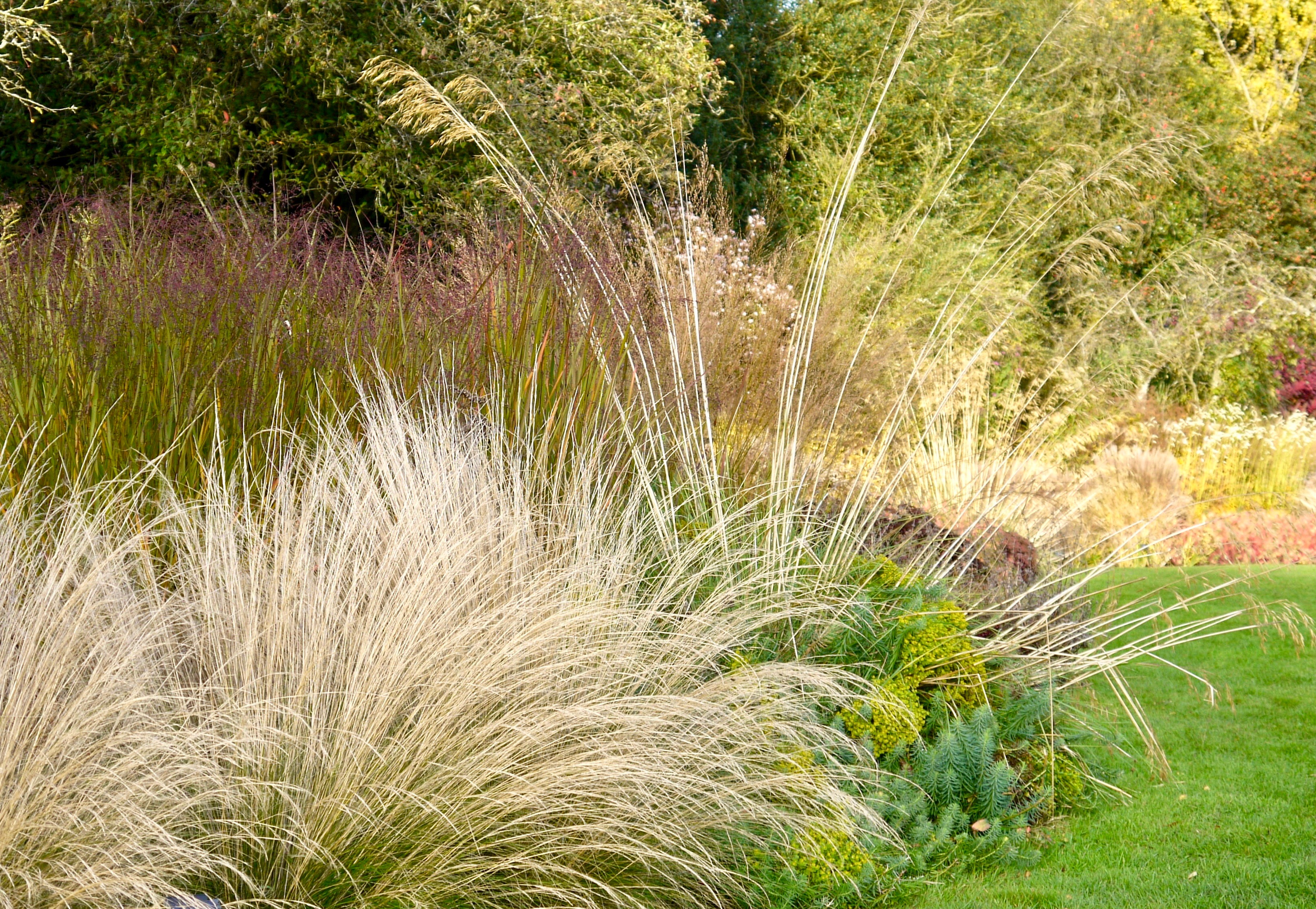Grasses can be more spectacular than flowers (Manoj Malde/Waterperry Gardens/PA)