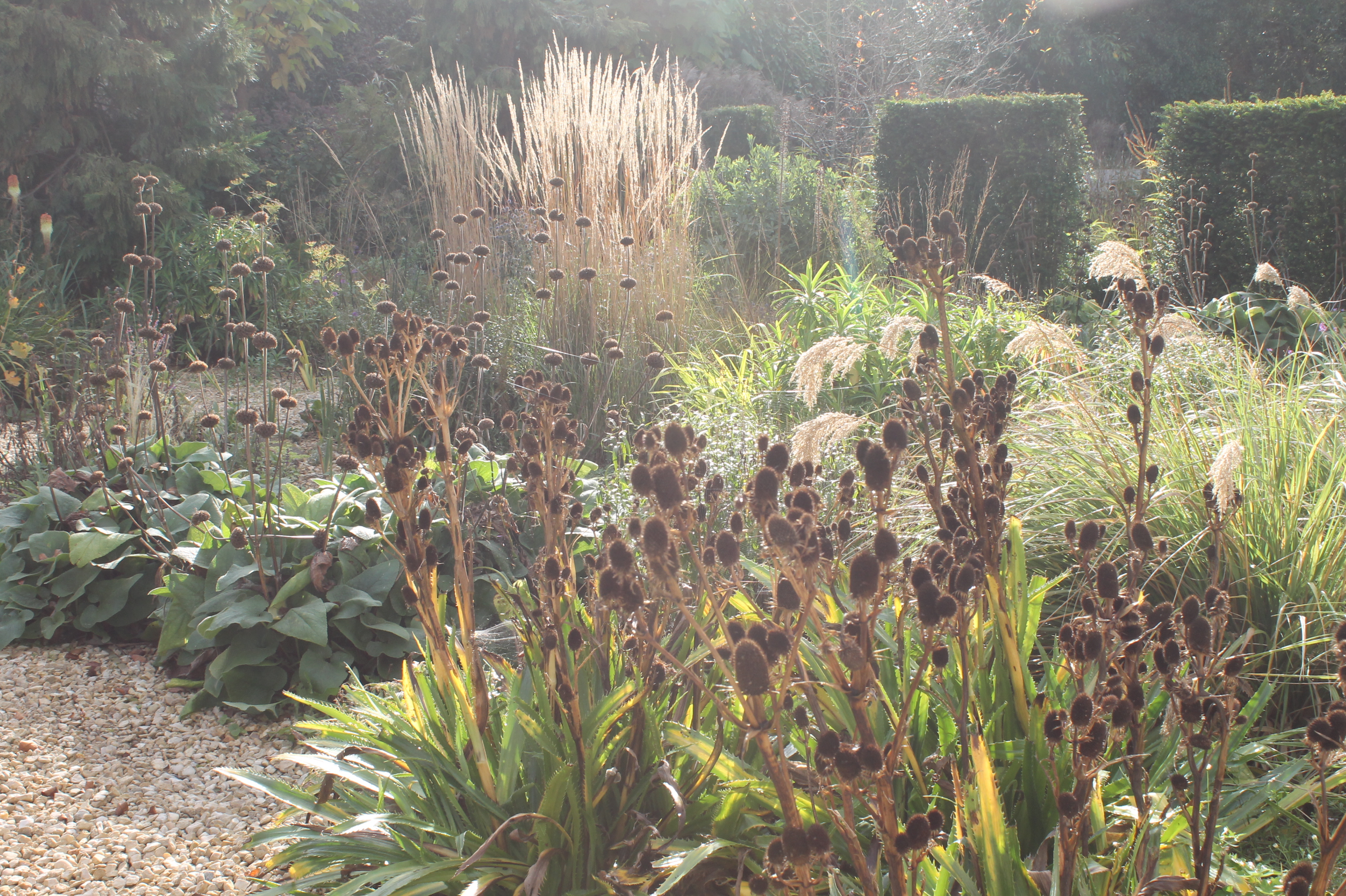 Use grasses and seed heads to add interest to borders (Gavin McWilliam/Andrew Wilson/PA)