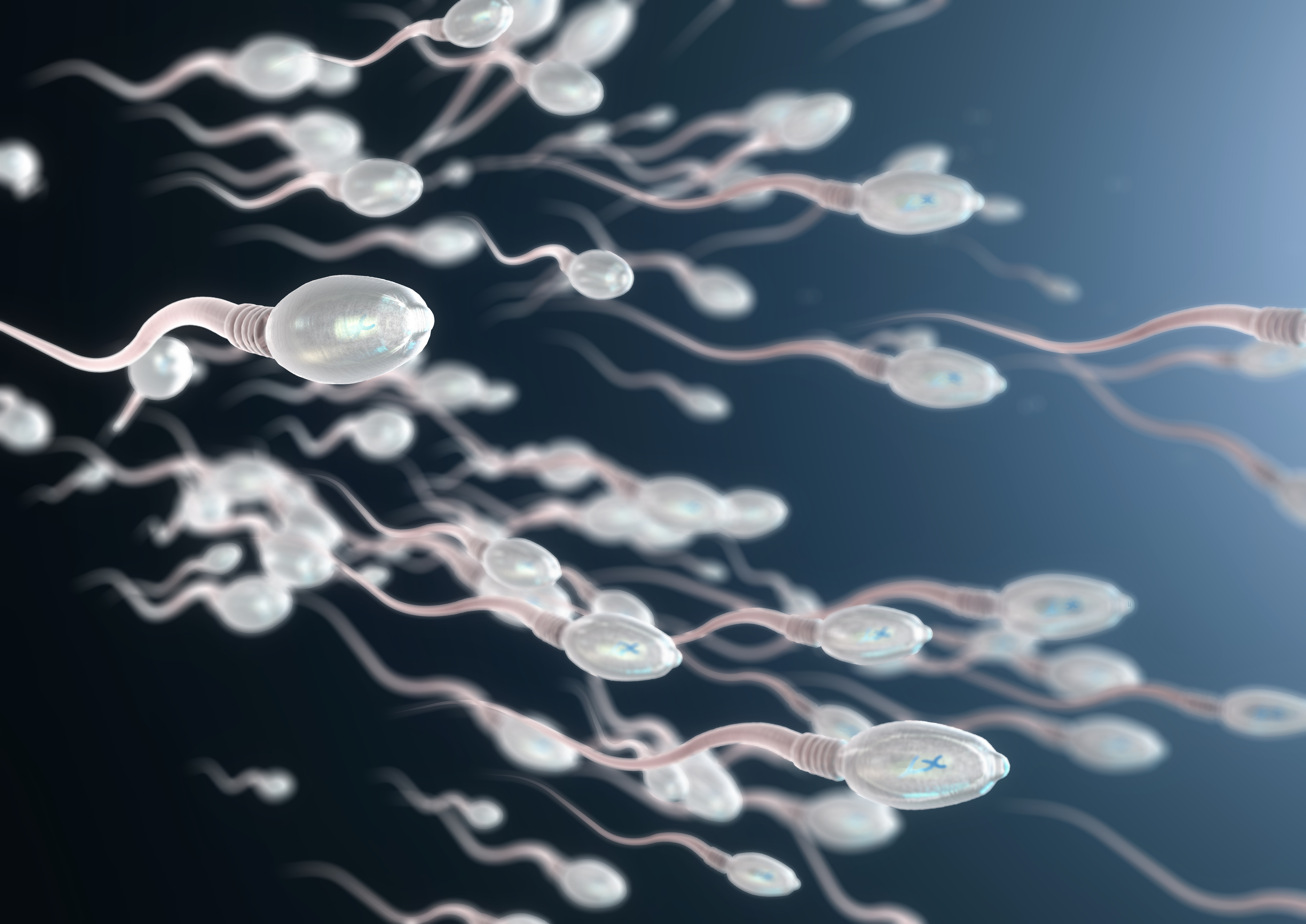 3d illustration of sperm cells moving to the right