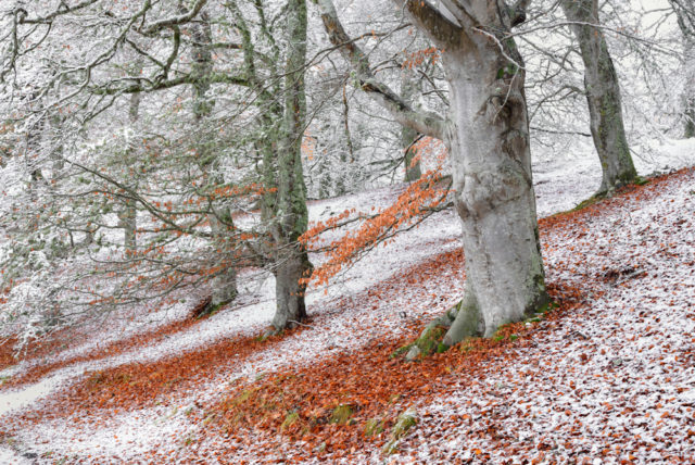 A picture of seasons overlapping in a beech wood won the Wild Woods category (James Roddie/BWPA/PA)