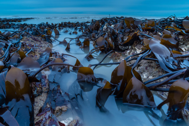 A kelp bed at dawn won the Botanical Britain category (Robert Canis/BWPA/PA)
