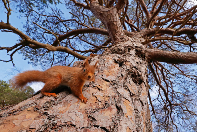 Shots of red squirrels won the British Seasons category (Neil Mcintyre/BWPA/PA)