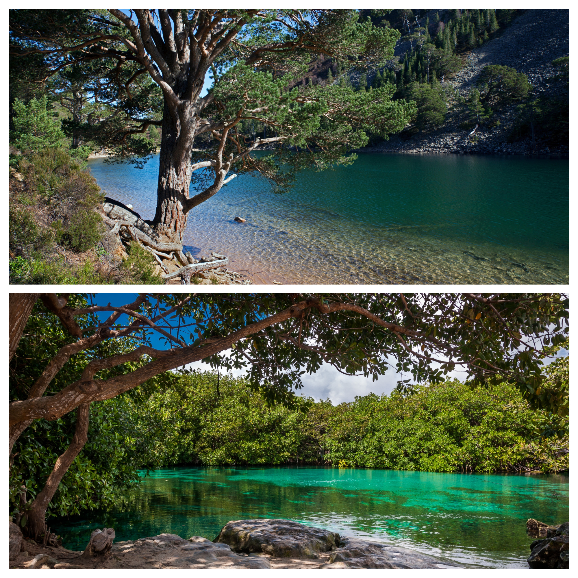 Top - An Lochan Uaine, Scotland; Bottom - Casa Cenote, Tulum, Mexico (Alamy/Thinkstock/PA)
