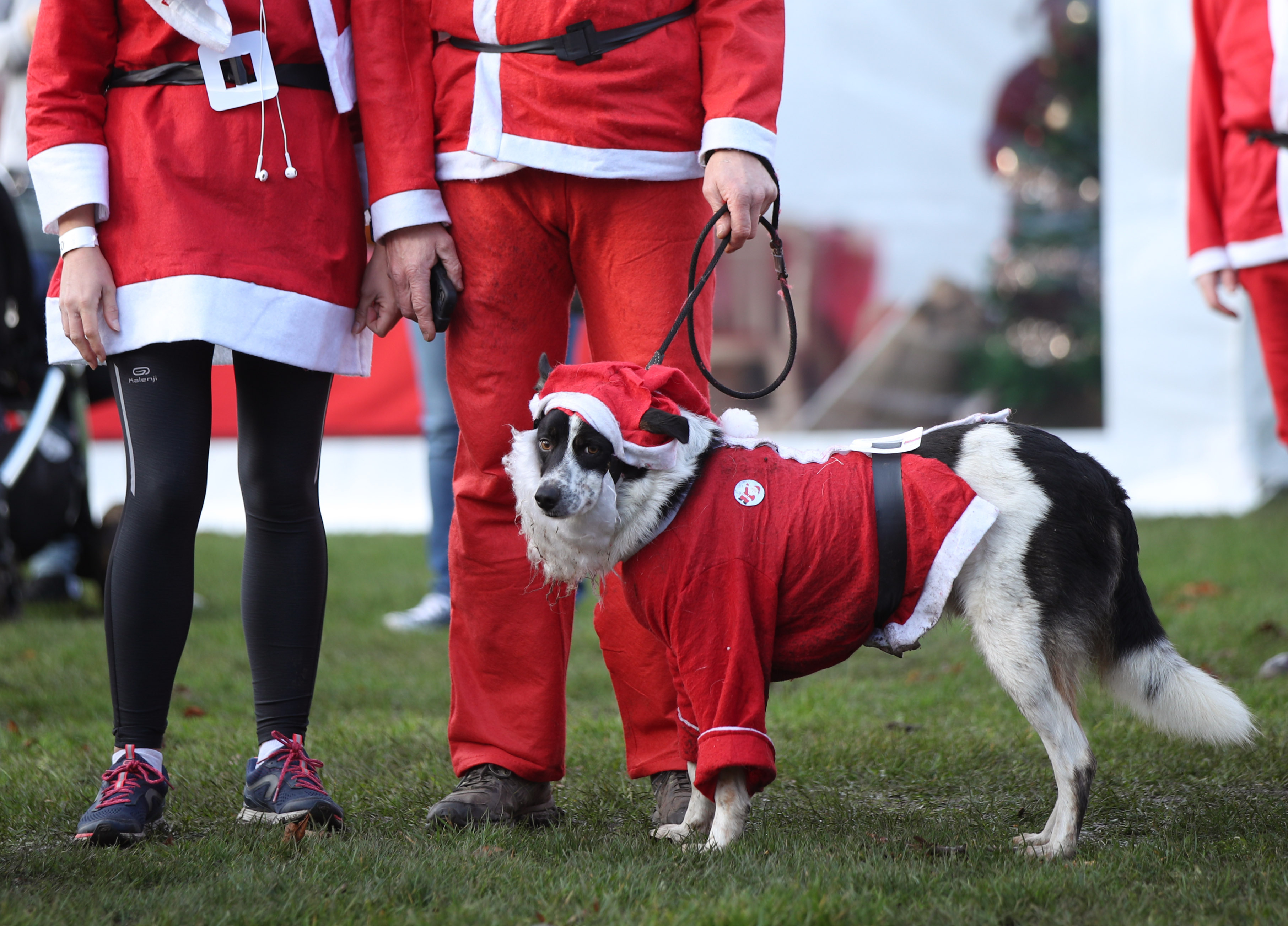 Participants and their dog taking part in the London Santa Run in Victoria Park, east London
