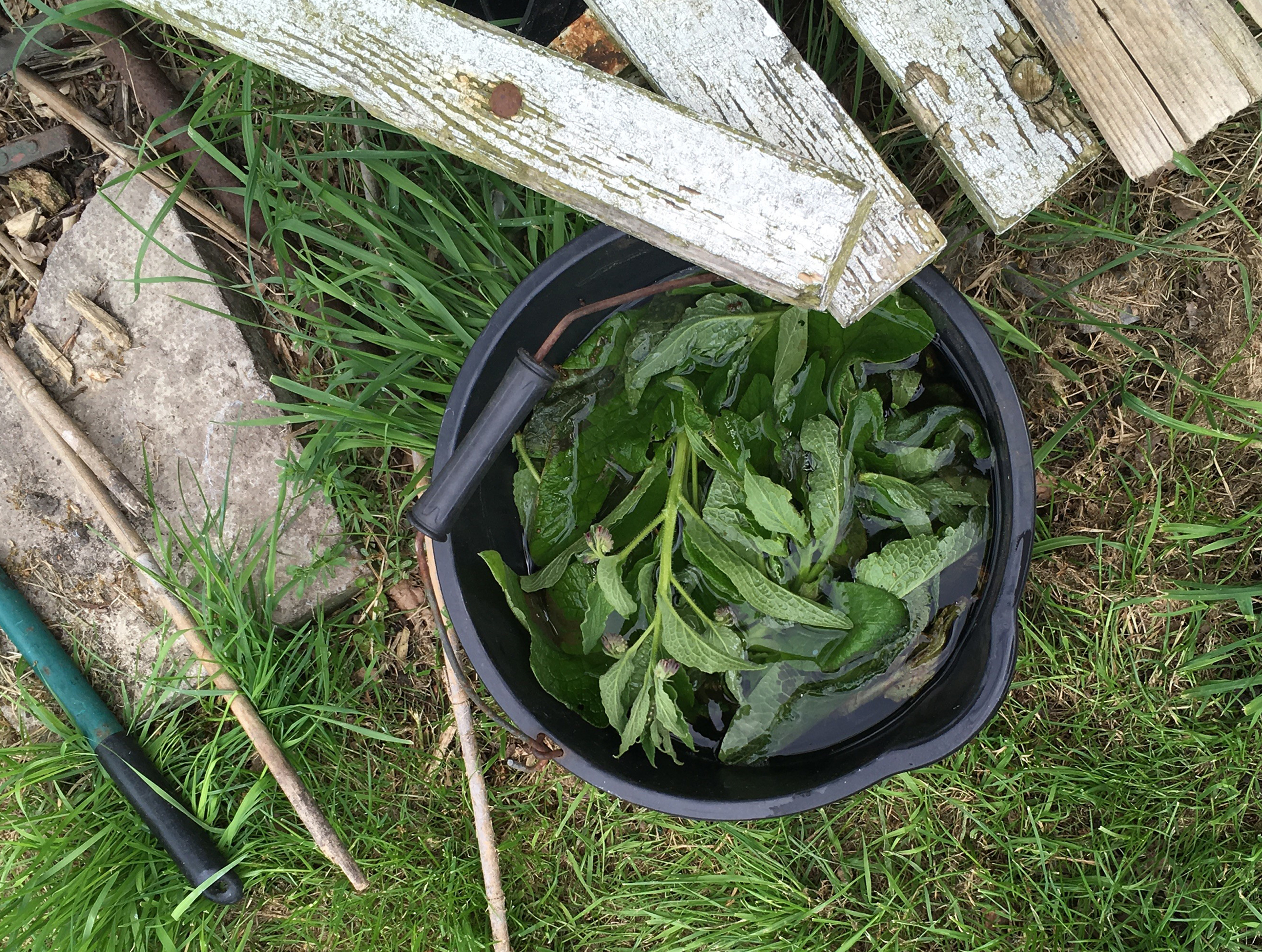 Steep comfrey in water to make a fertiliser (Matthew Appleby/PA)
