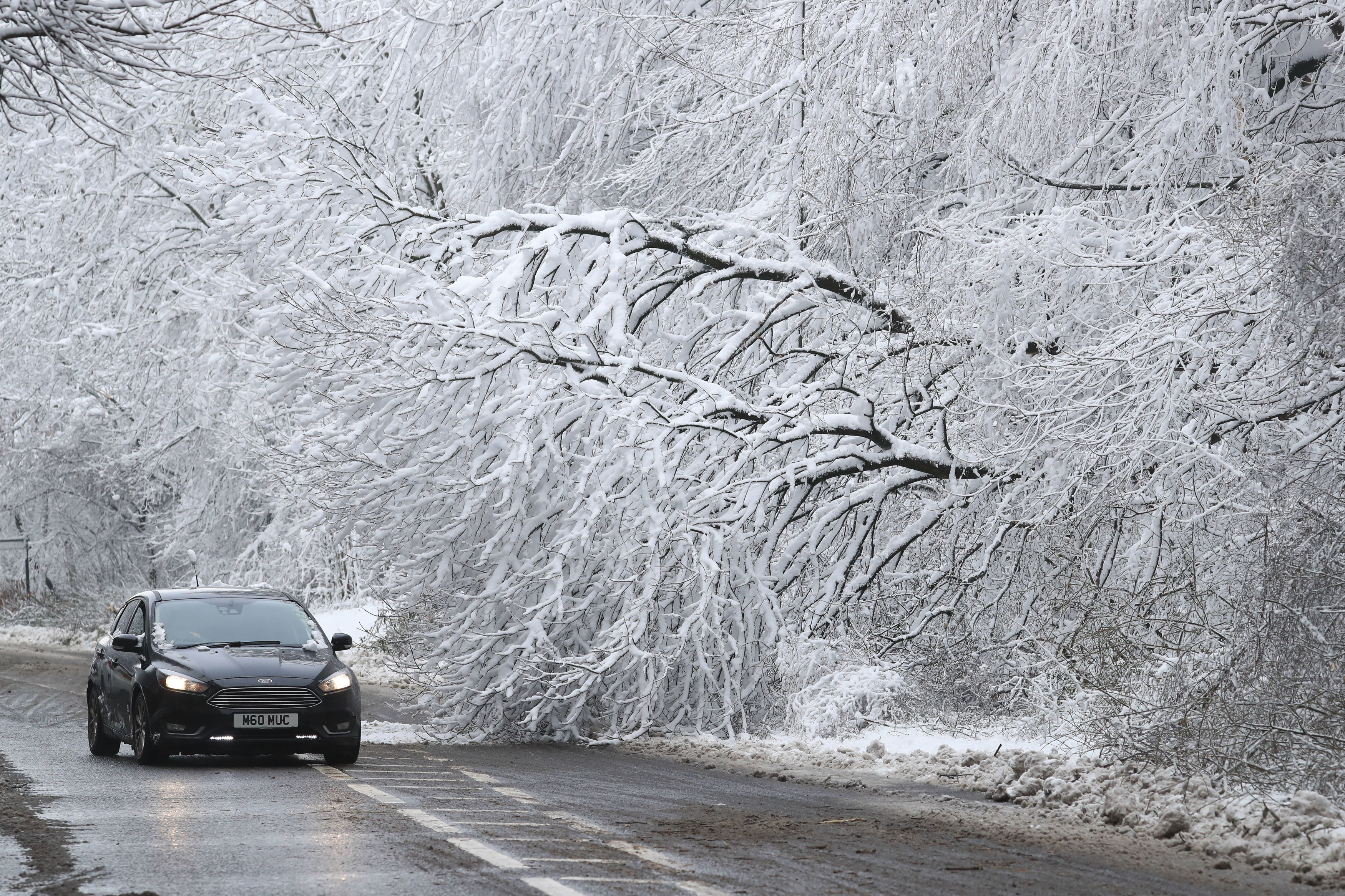 Car drives past snow-covered tree
