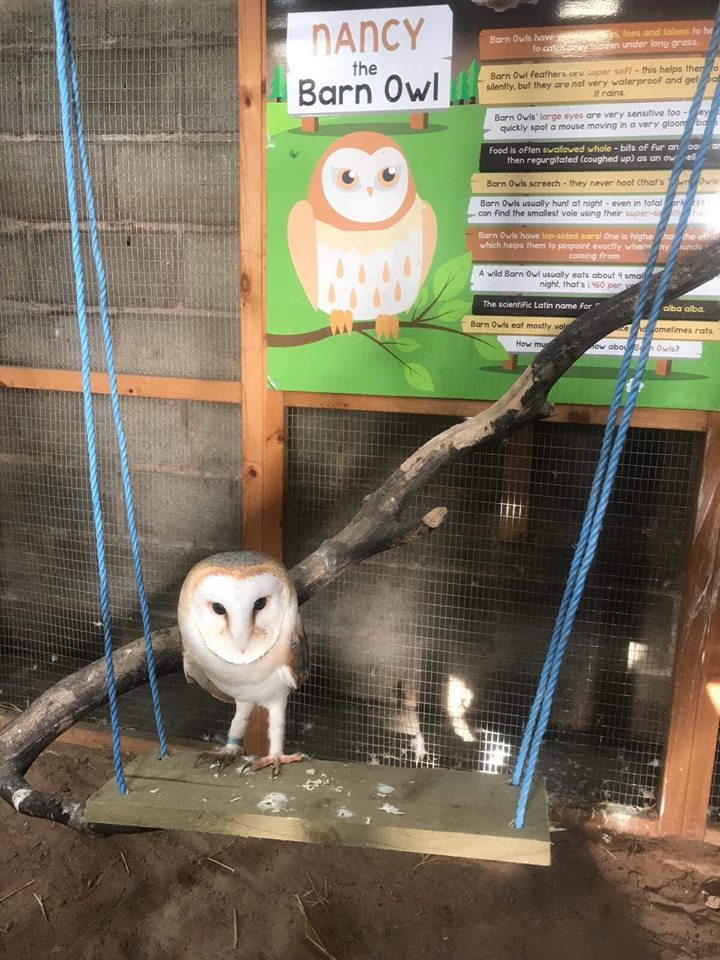 An owl on a swing