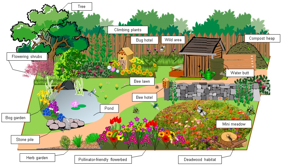 Buglife's suggested invertebrate-friendly garden (Buglife/PA)
