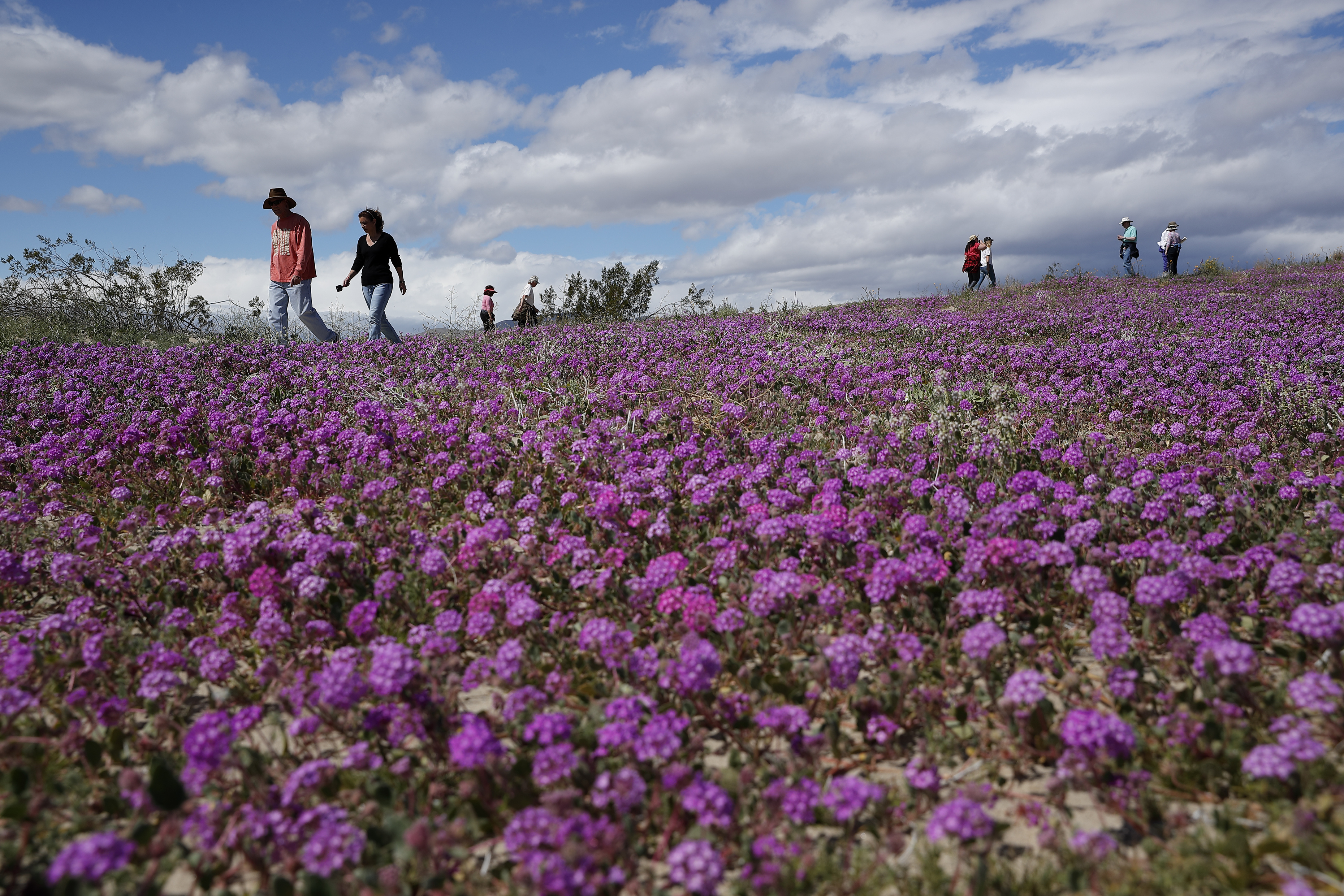 The 'super bloom'