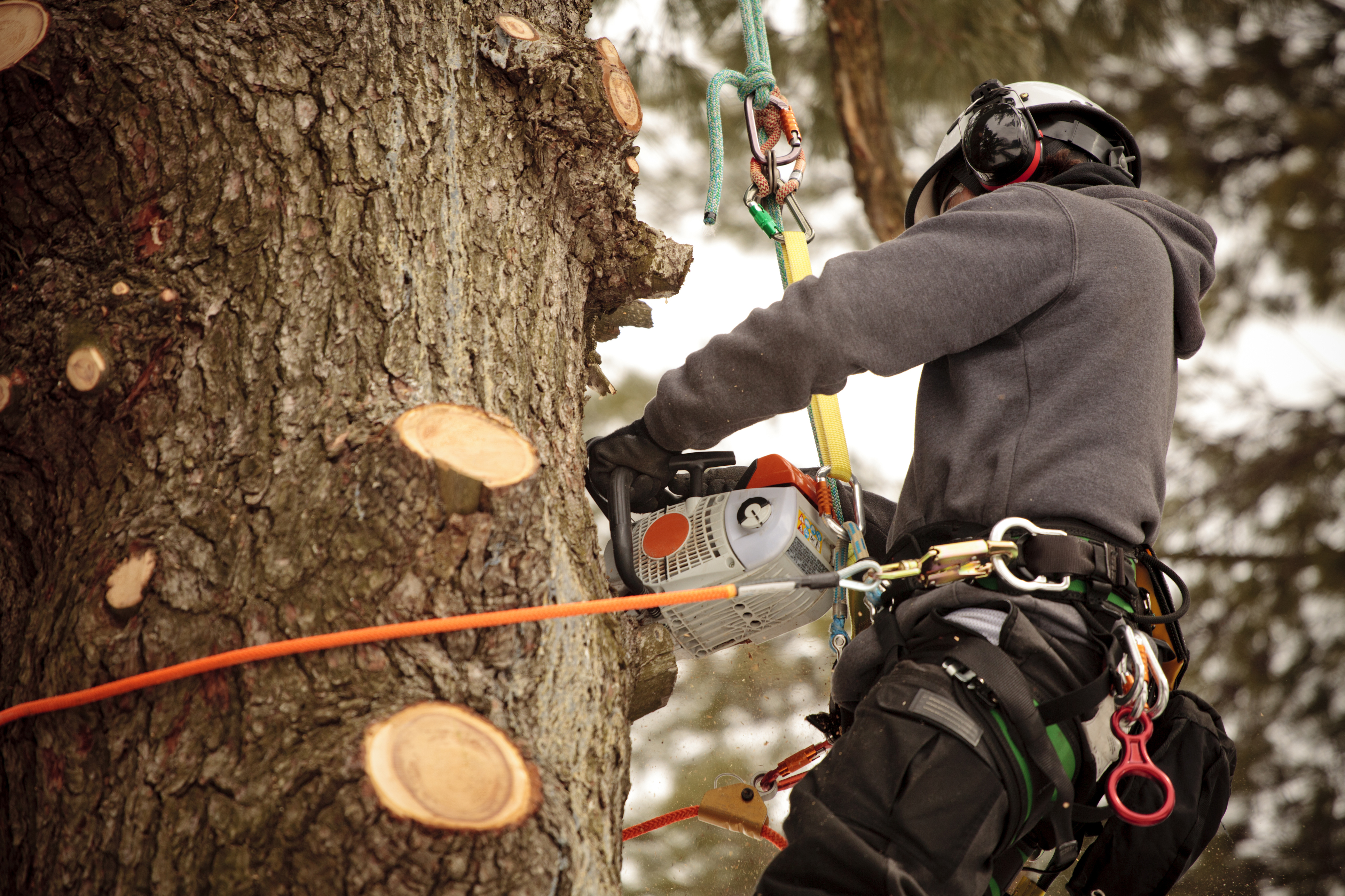 Pruning a large tree