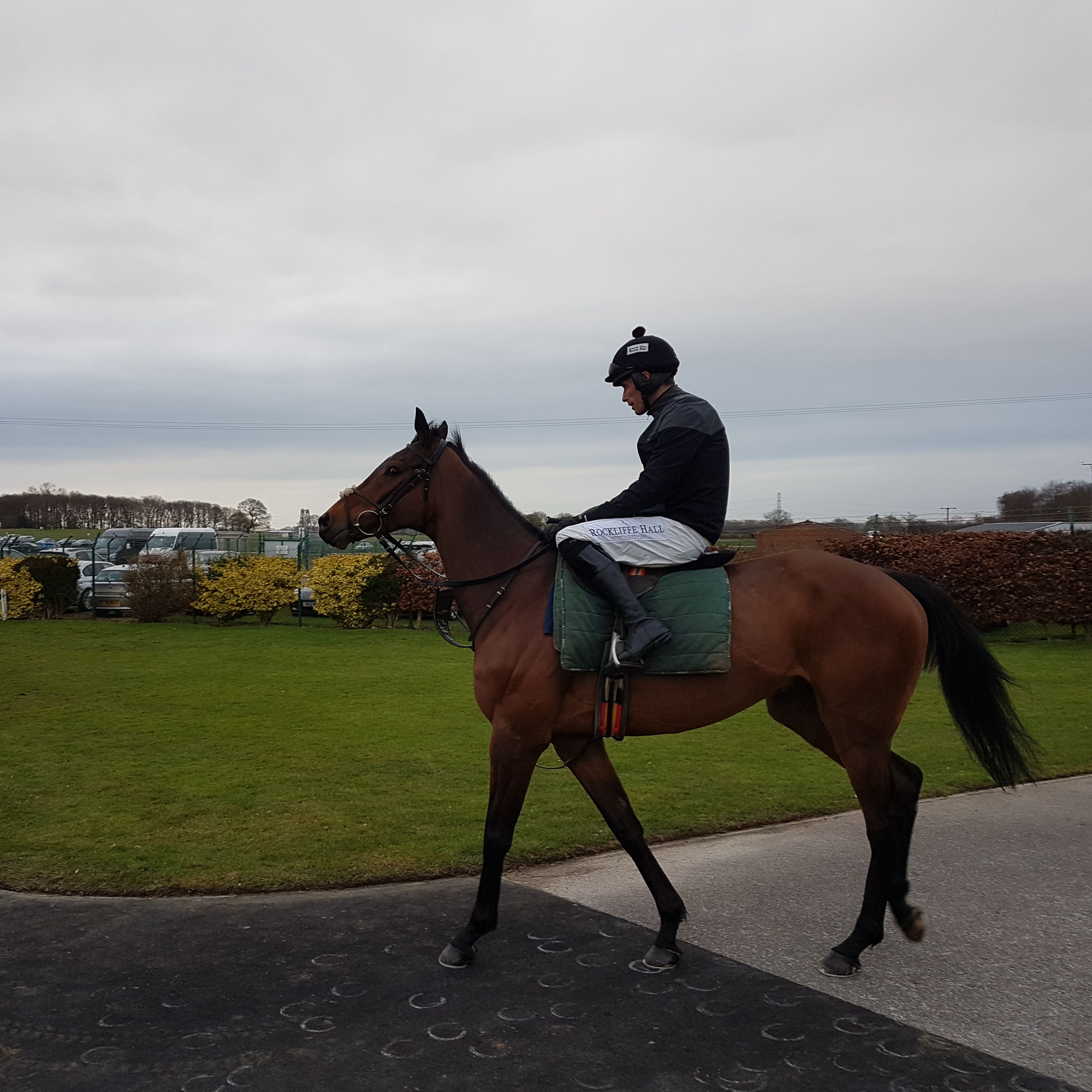 Blaklion heads out for his racecourse gallop with big-race pilot Sean Quinlan