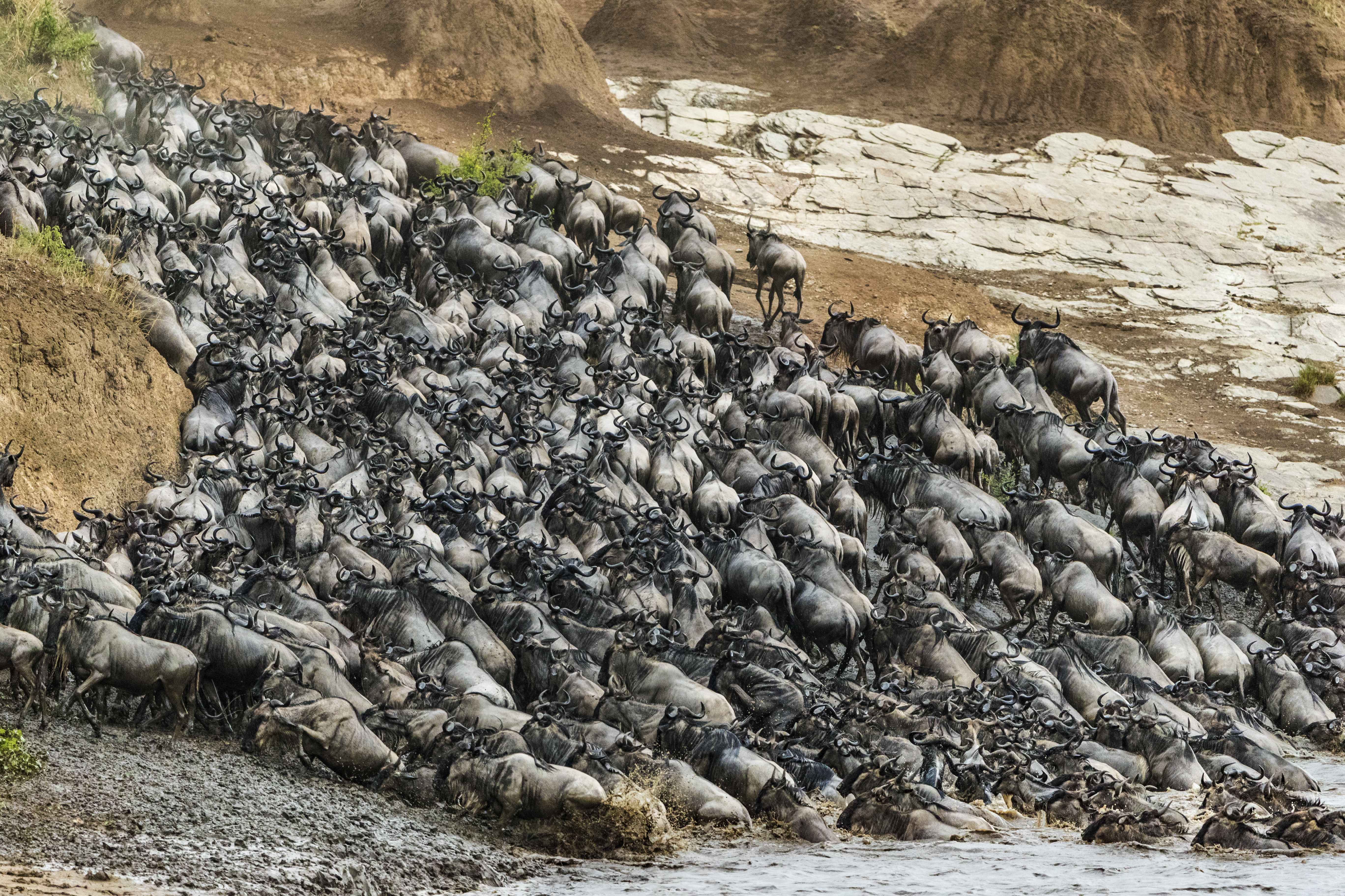 Wildebeest crossing the Mara river (Animal Planet/PA)