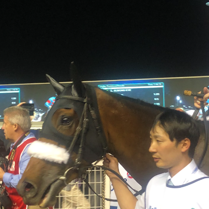 Almond Eye after winning the Dubai Turf at Meydan