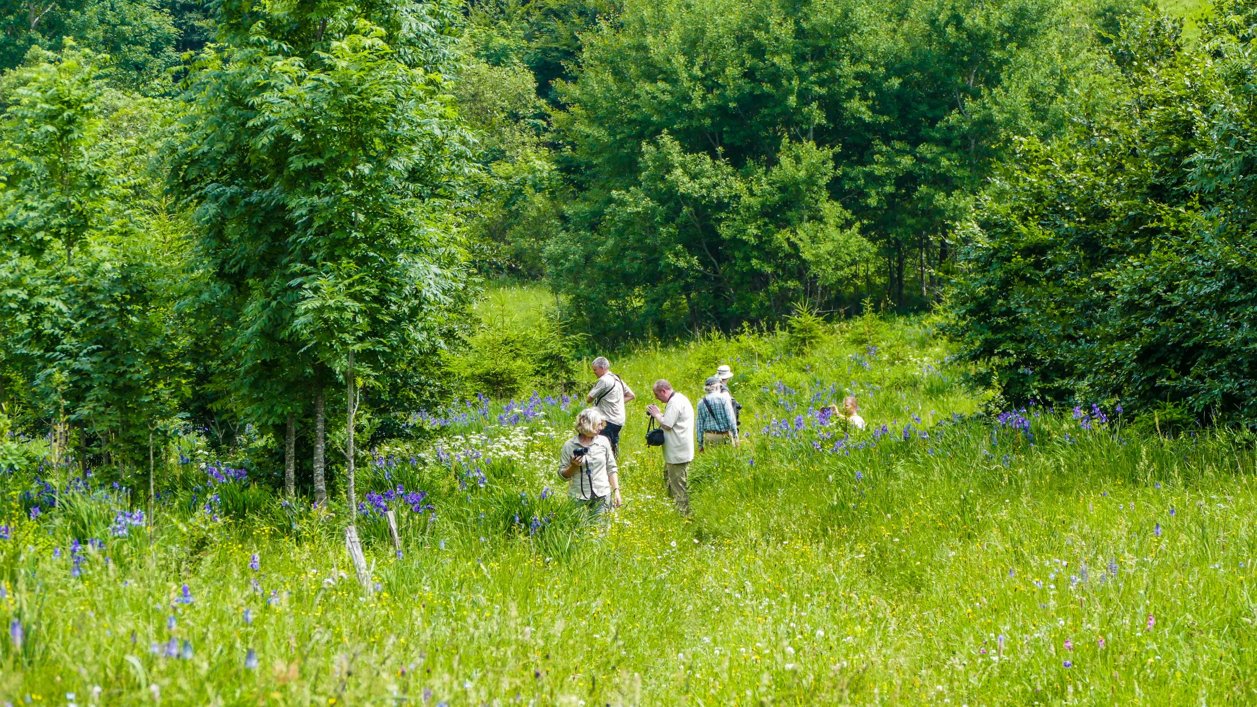 Hikers searching for birds