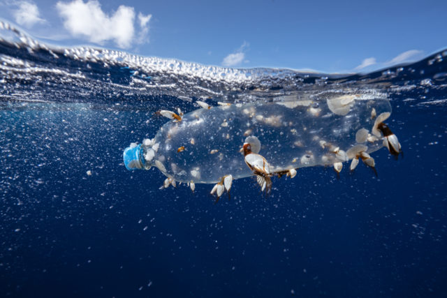 Plastic pollution is one of the problems facing the world's oceans (Justin Hofman/Greenpeace/PA)