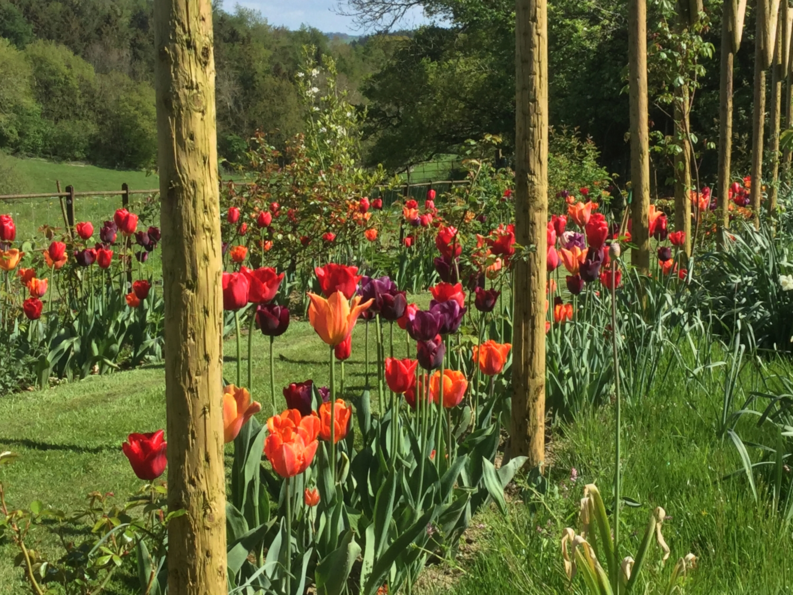 Rows of red tulips at Gorsty House (Gorsty House/National Garden Scheme/PA)