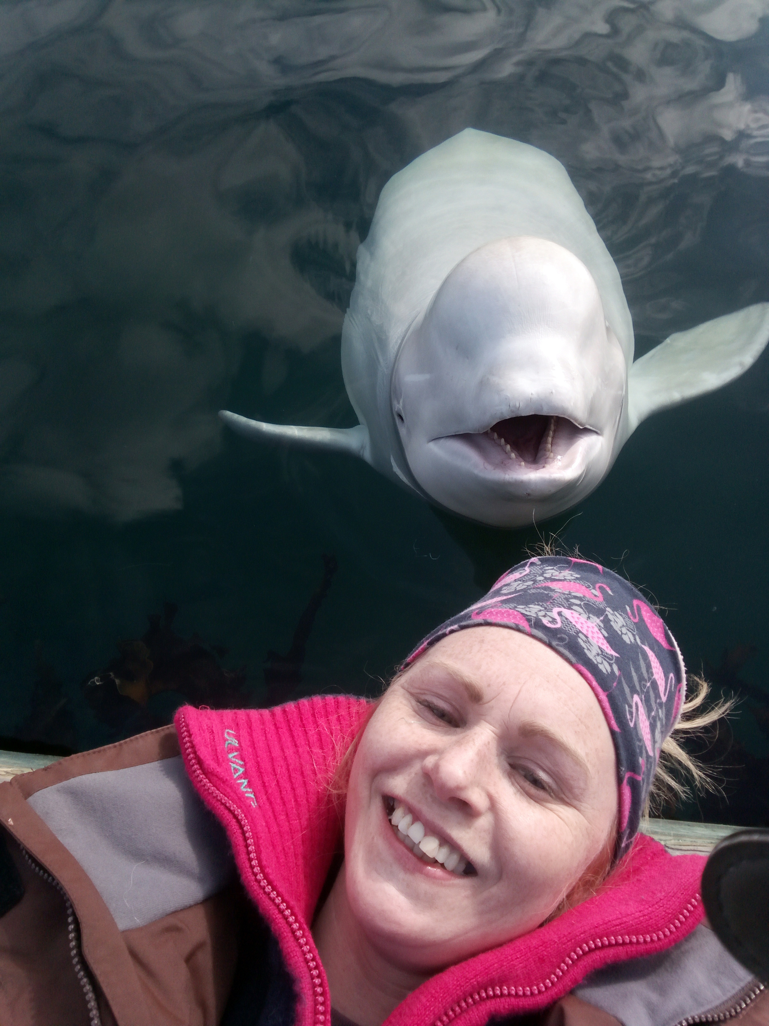 Linn Saether poses with a beluga whale