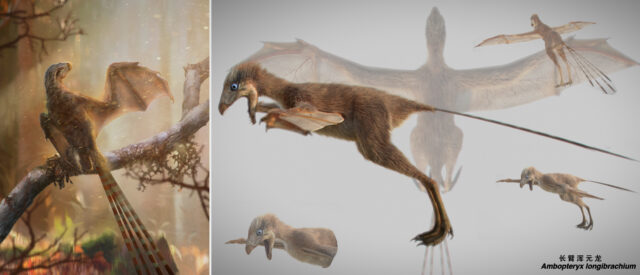 Ambopteryx longibrachium had membranous bat-like wings, scientists said